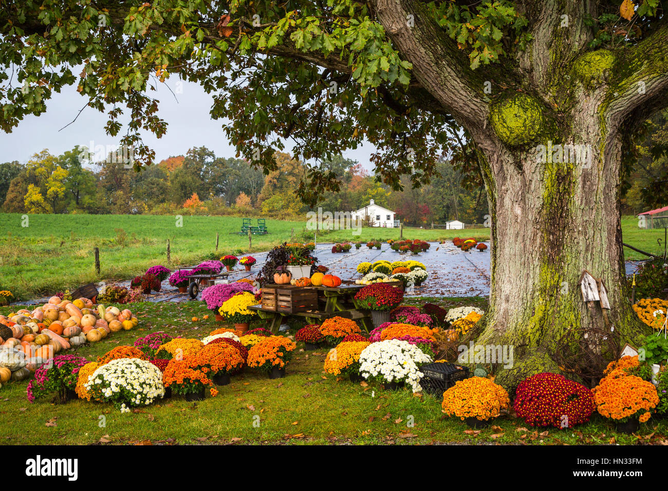 The Blessing Acres farm produce display of flowers near Berlin, Ohio, USA. - Stock Image