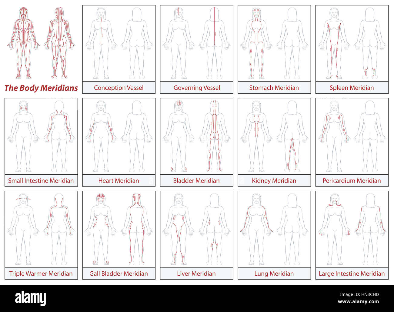Body Meridians Chart Woman Flow Direction Stock Photo