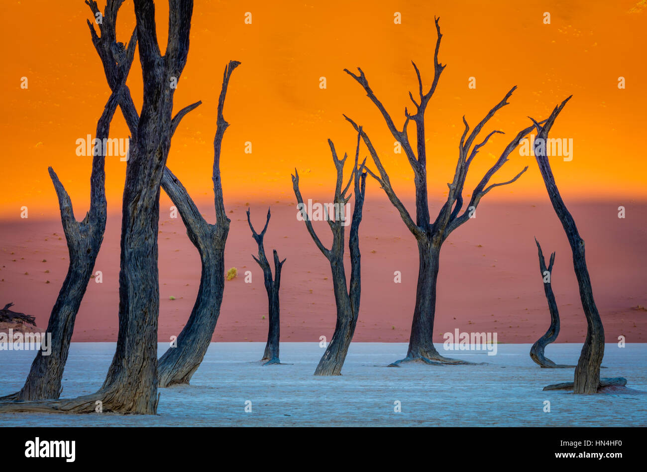 Deadvlei is a white clay pan located near the more famous salt pan of Sossusvlei, inside the Namib-Naukluft Park in Namibia. Stock Photo