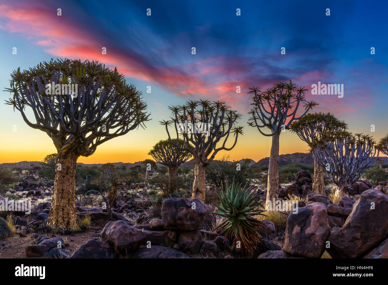 The Quiver Tree Forest (Kokerboom Woud in Afrikaans) is a forest and tourist attraction of southern Namibia. Stock Photo