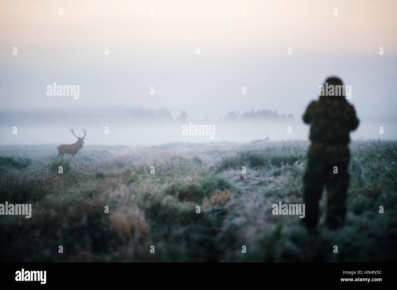 Hunter holding a rifle and aiming red deer prey in the mist, hunter photoshooting at the morning. - Stock Image