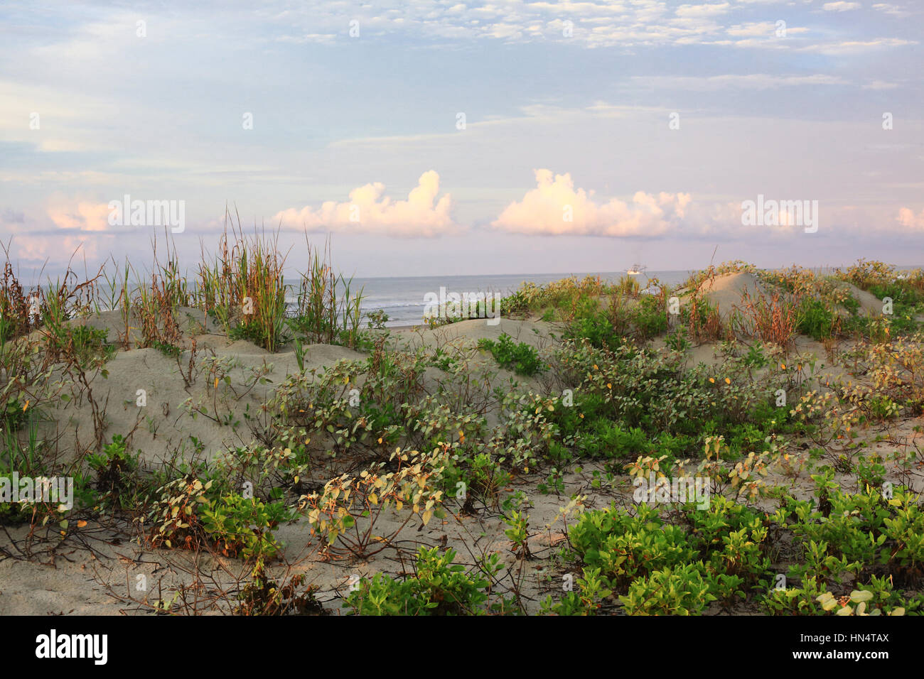 Sunrise at the dunes of the beach at Kiawah Island, South Carolina. - Stock Image