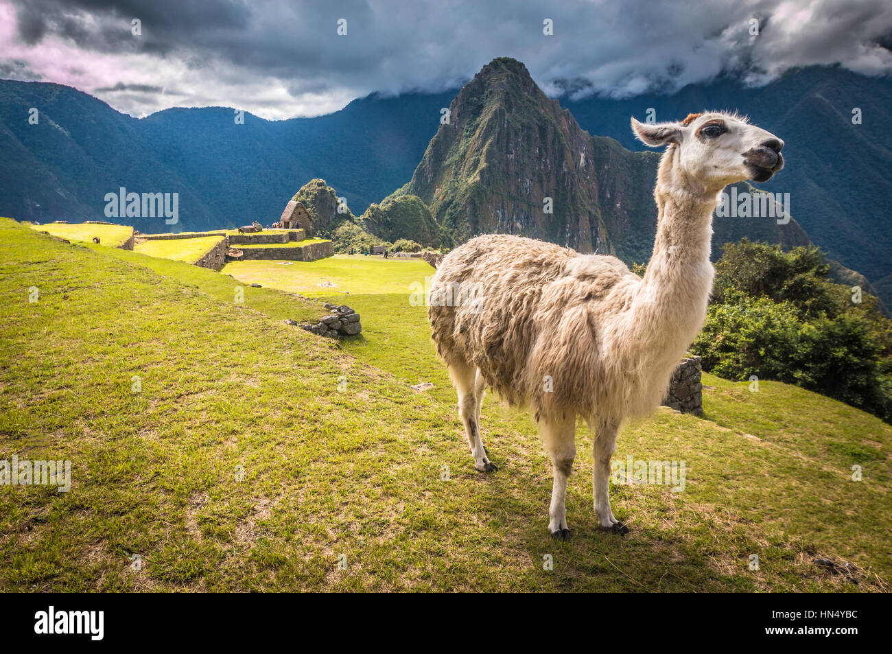 Machu Picchu - Stock Image