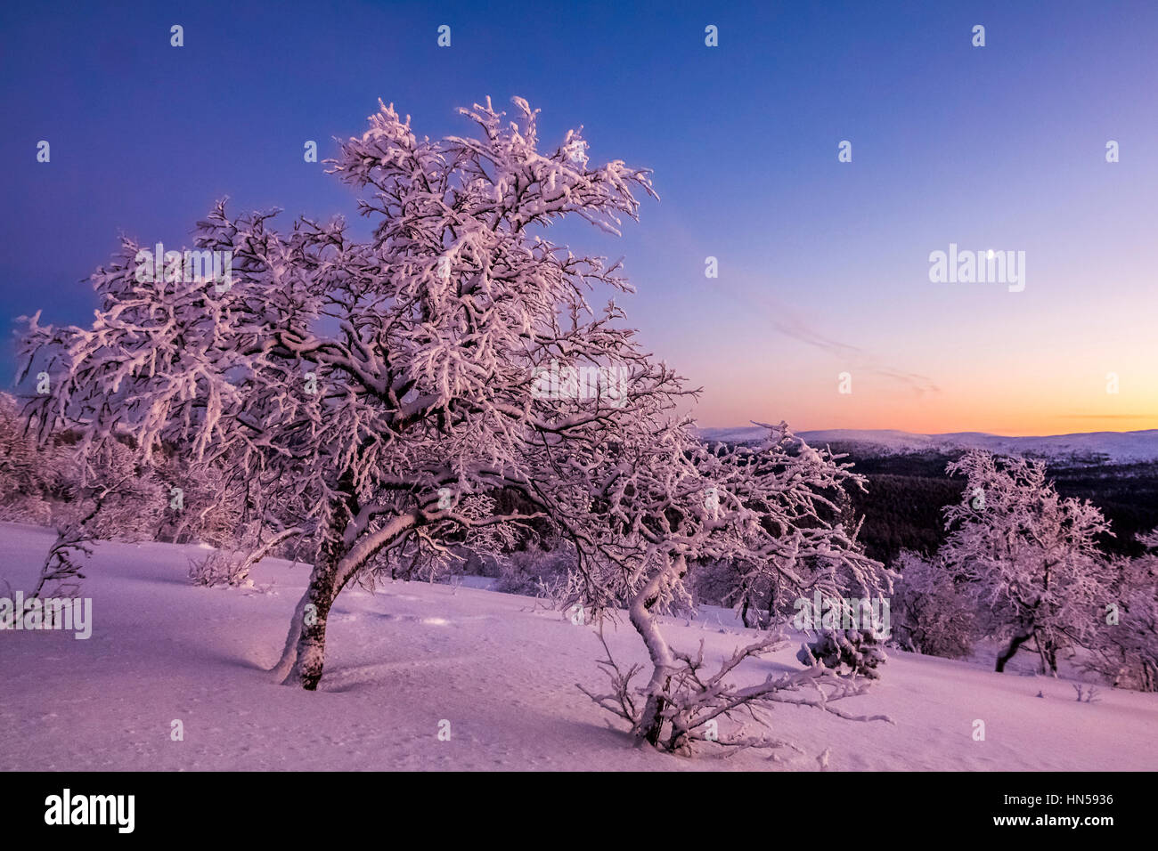 Winter evening in Finnish Lapland - Stock Image