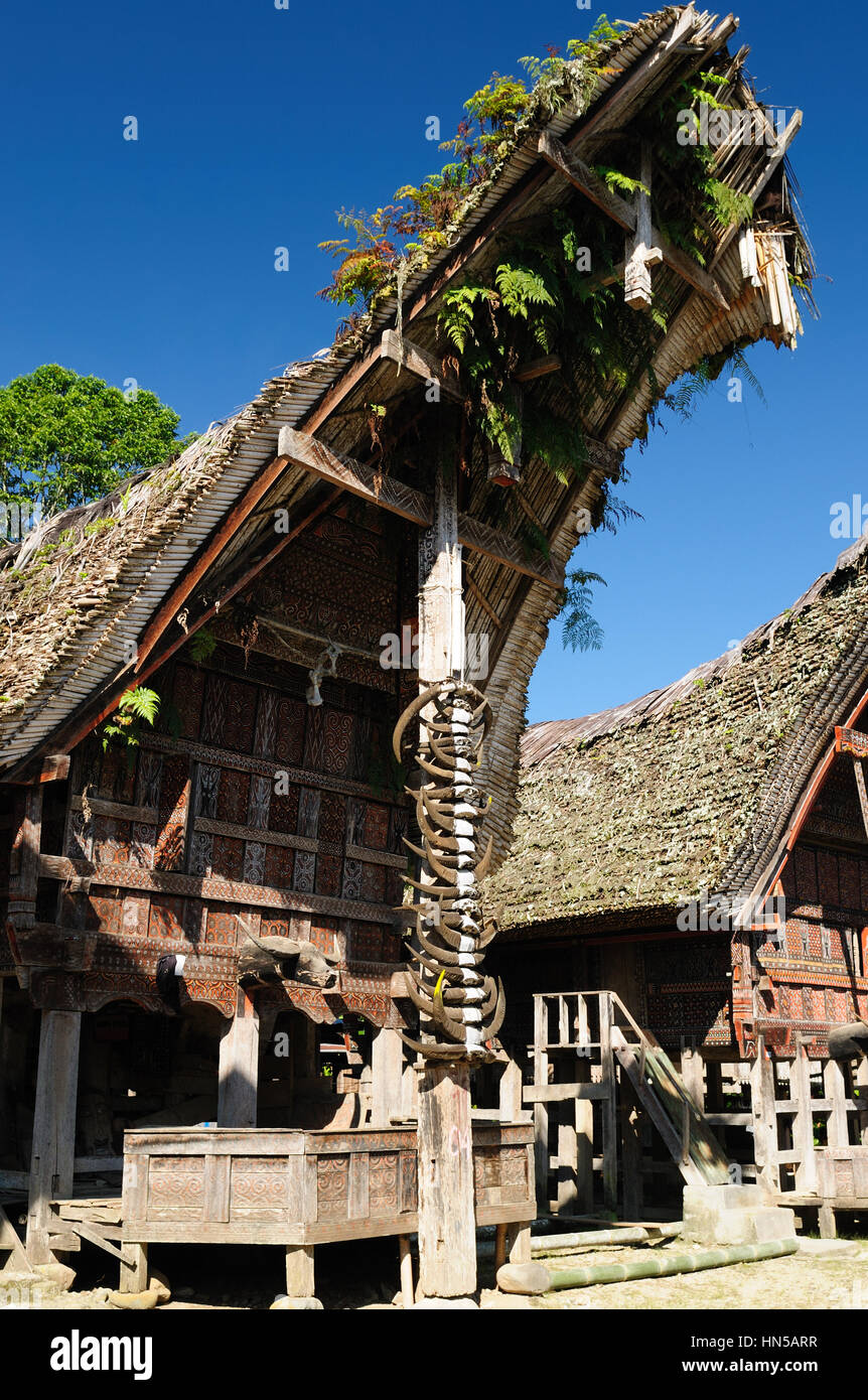 Traditional sweeping and elaborately painted houses with boat-shaped roofs in Tana Toraja. Tongkonan house on the - Stock Image