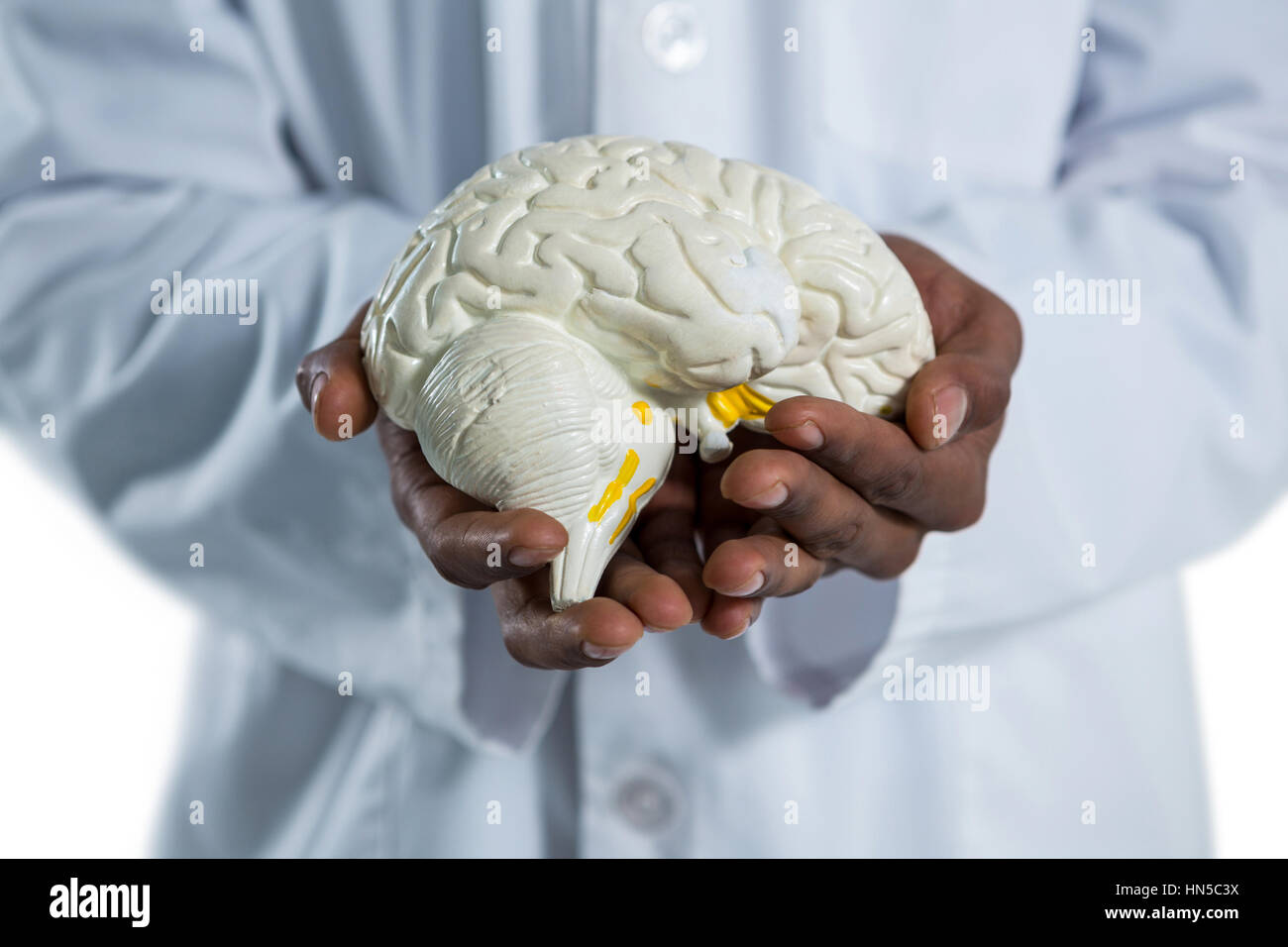 Mid section of doctor holding anatomy brain - Stock Image