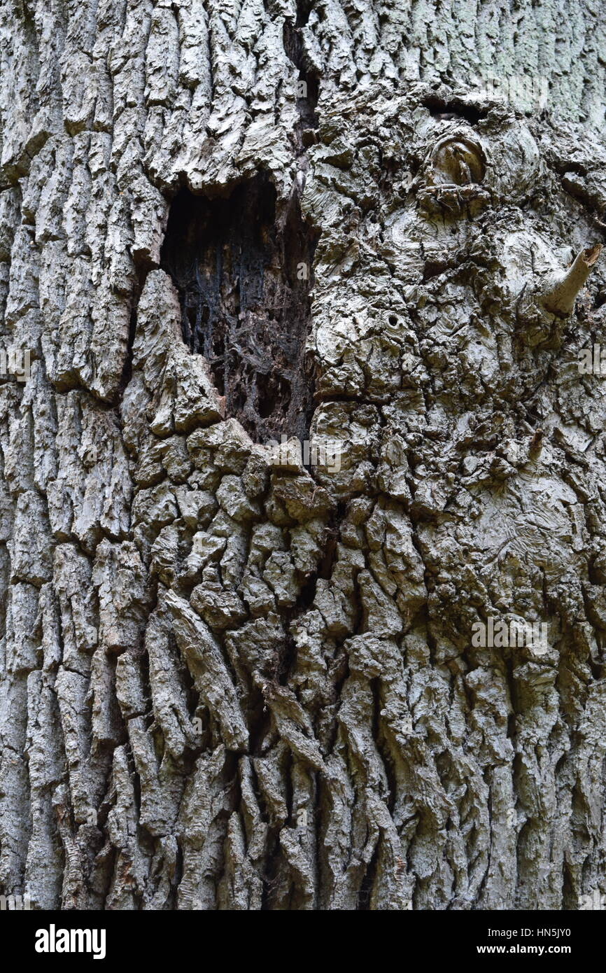 Old tree trunk - Stock Image