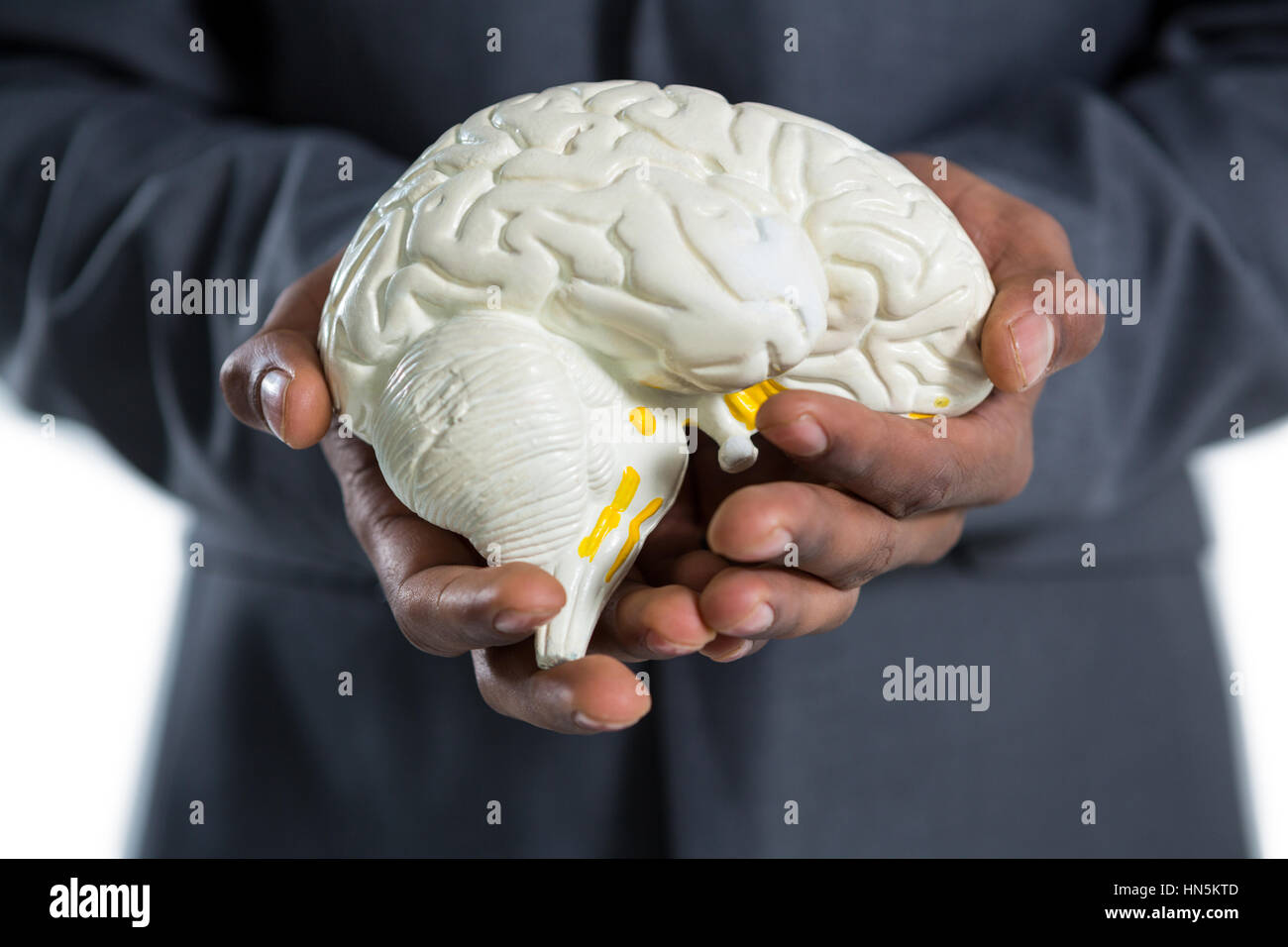 Mid section of businessman holding anatomy brain - Stock Image