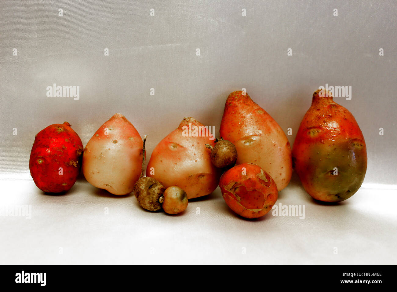 Potato Family of 5 With Pets Number 21 of 47 - Stock Image