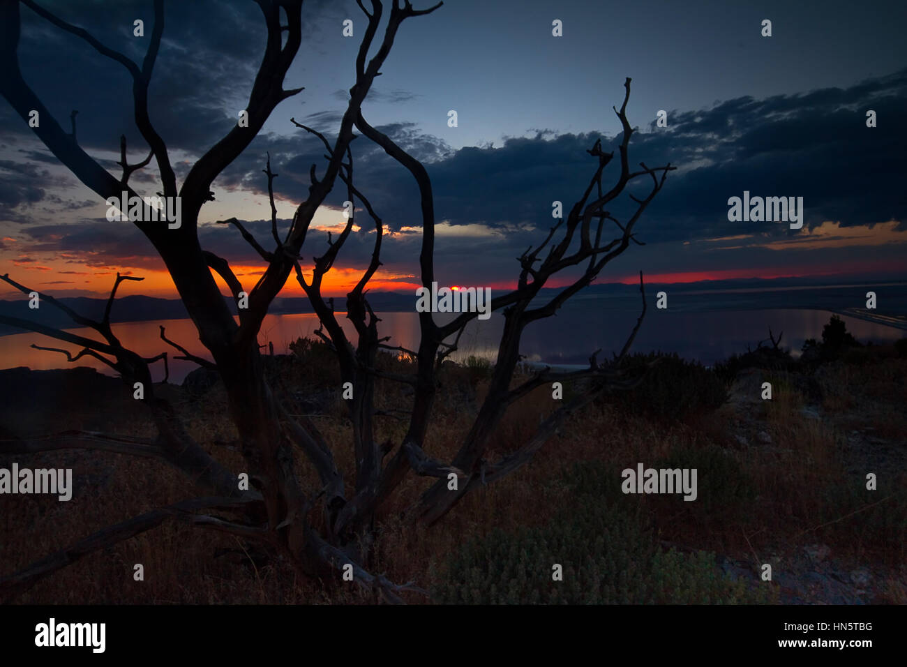 Branch in front of sunset at Stansbury Island, Tooele, Utah, USA Stock Photo