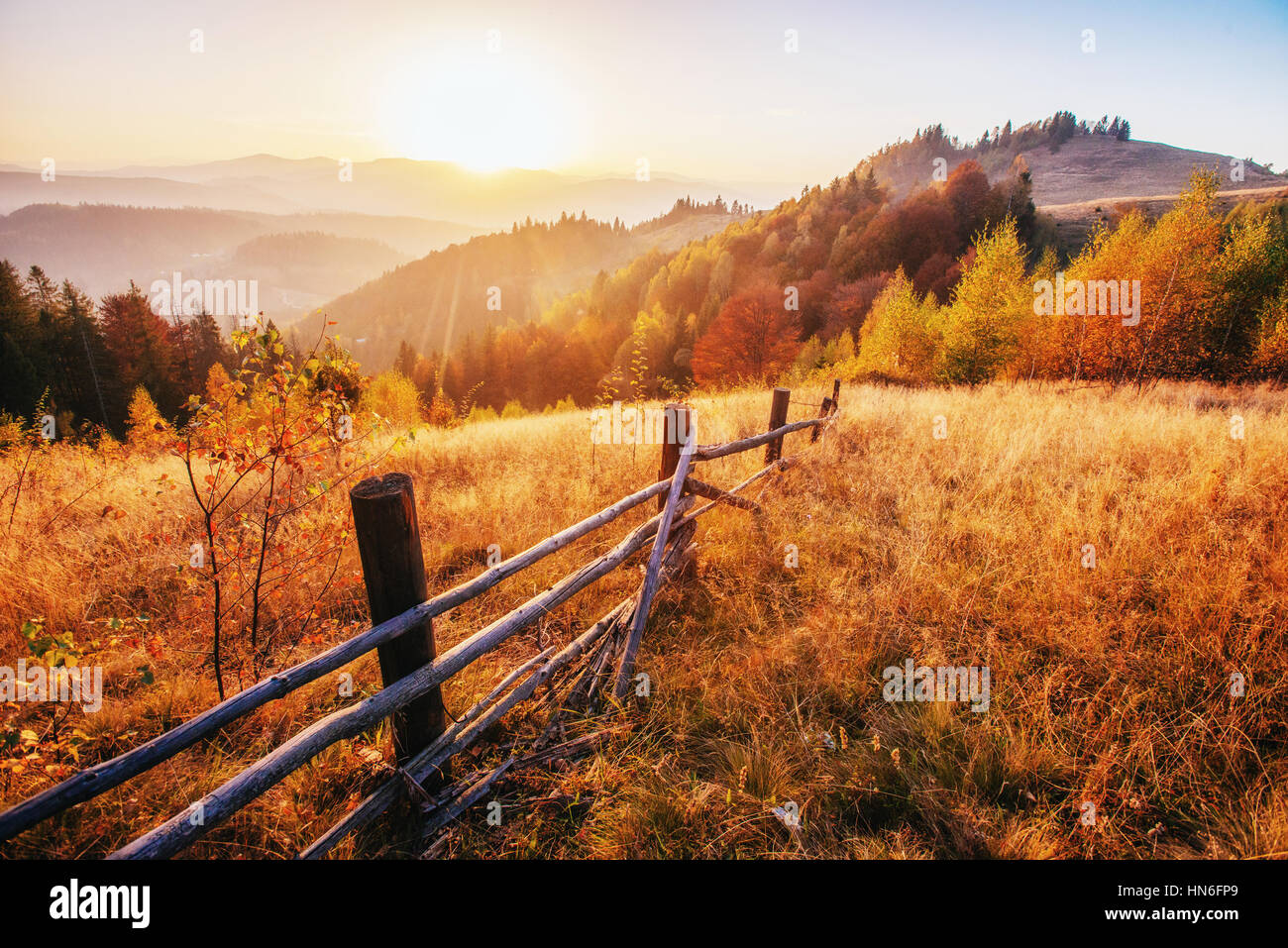Forest Road in the autumn.  Landscape. - Stock Image