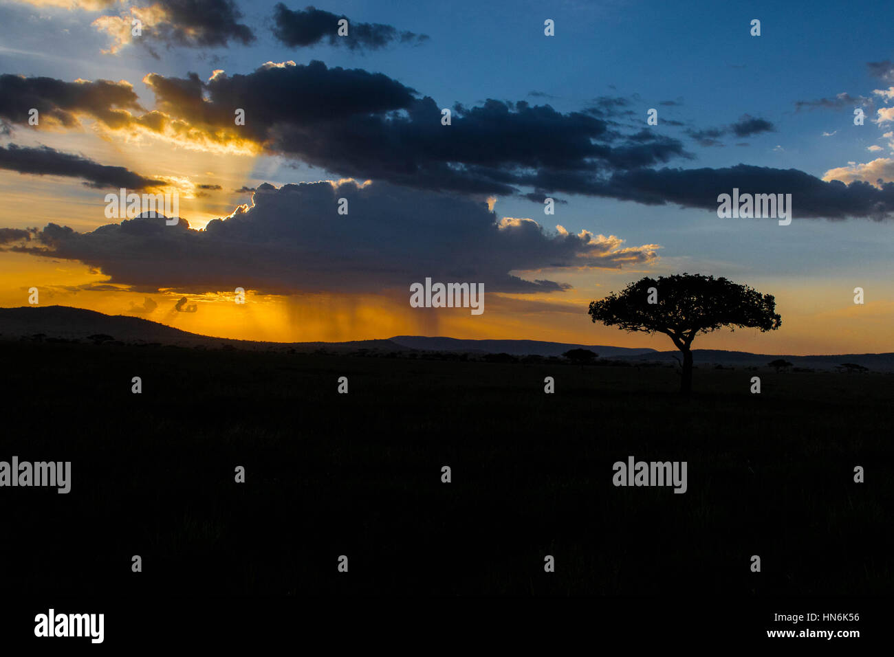 SERENGETI Tree Silhouette with African Sunset in Serengeti National Park, Tanzania, Africa - Stock Image