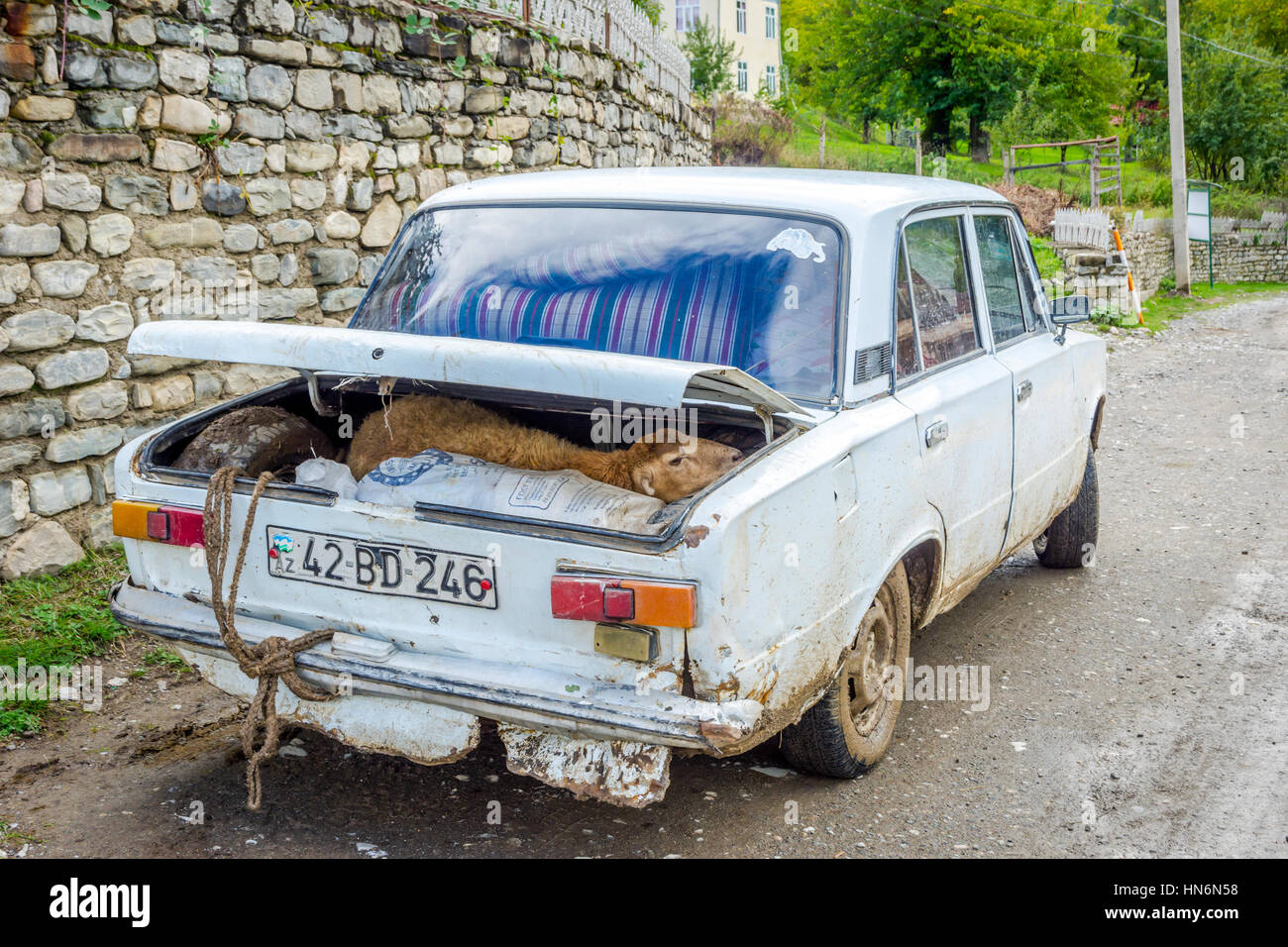 LAHICH, AZERBAIJAN - OCTOBER 1: Sheep to be transported in the trunk of old lada car in Azeri countryside. October - Stock Image