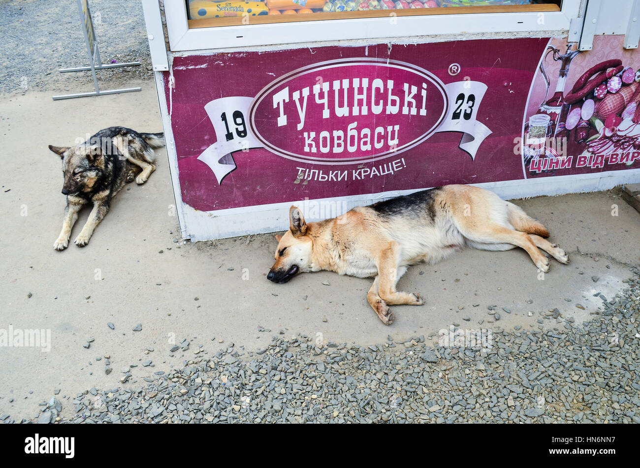 Rivne, Ukraine - May 14, 2013: Two stray homeless dogs sleeping on street by a sausage deli store - Stock Image