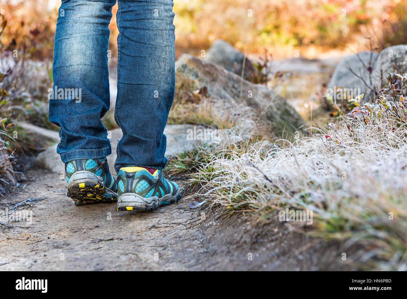 Young womans legs walking through frost iced grass trail path illuminated by morning sunlight at Dolly Sods, West - Stock Image