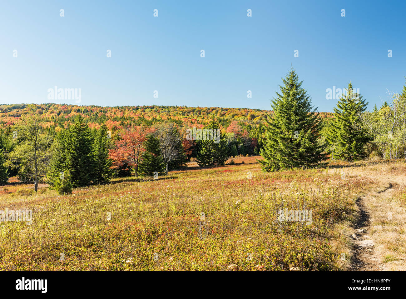 Dolly sods meadow and trail path during autumn in West Virginia - Stock Image