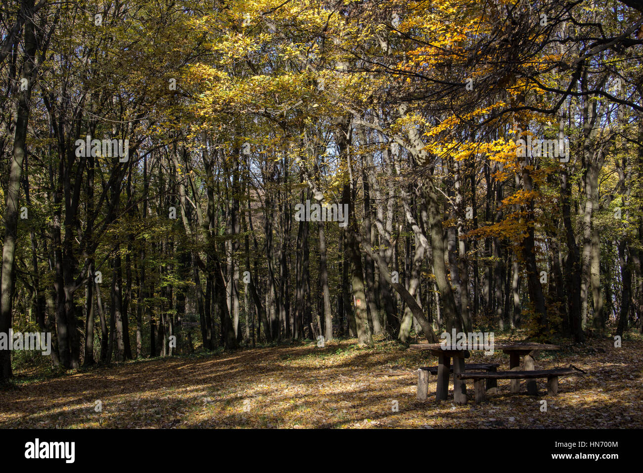 Outing Spot In A Forest In The Sunny Fall - Stock Image