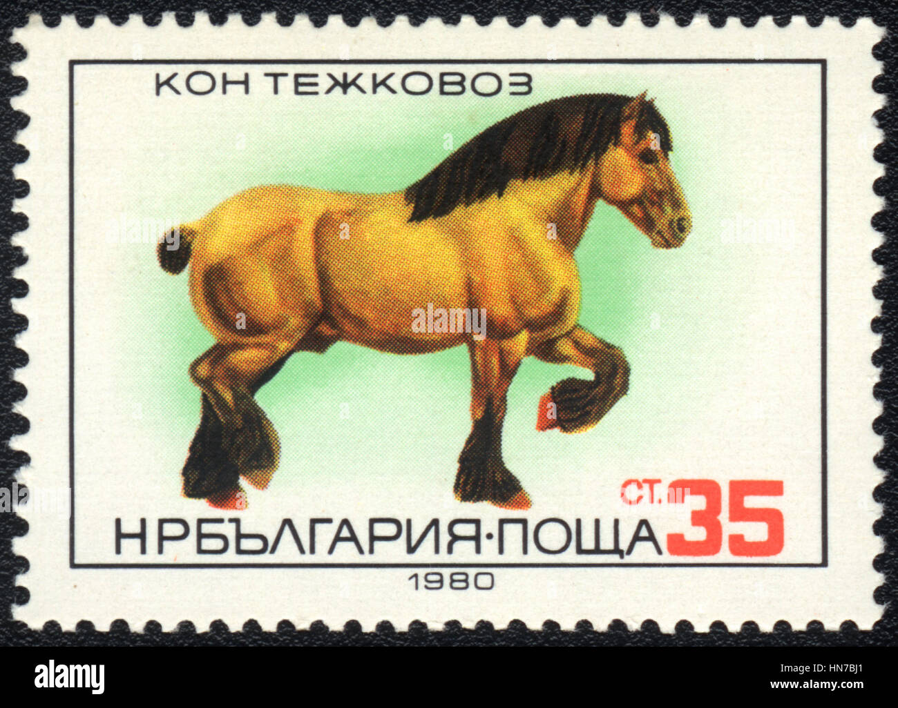A postage stamp printed in Bulgaria shows  a Heavy Draught, horse breed , circa 1980 - Stock Image