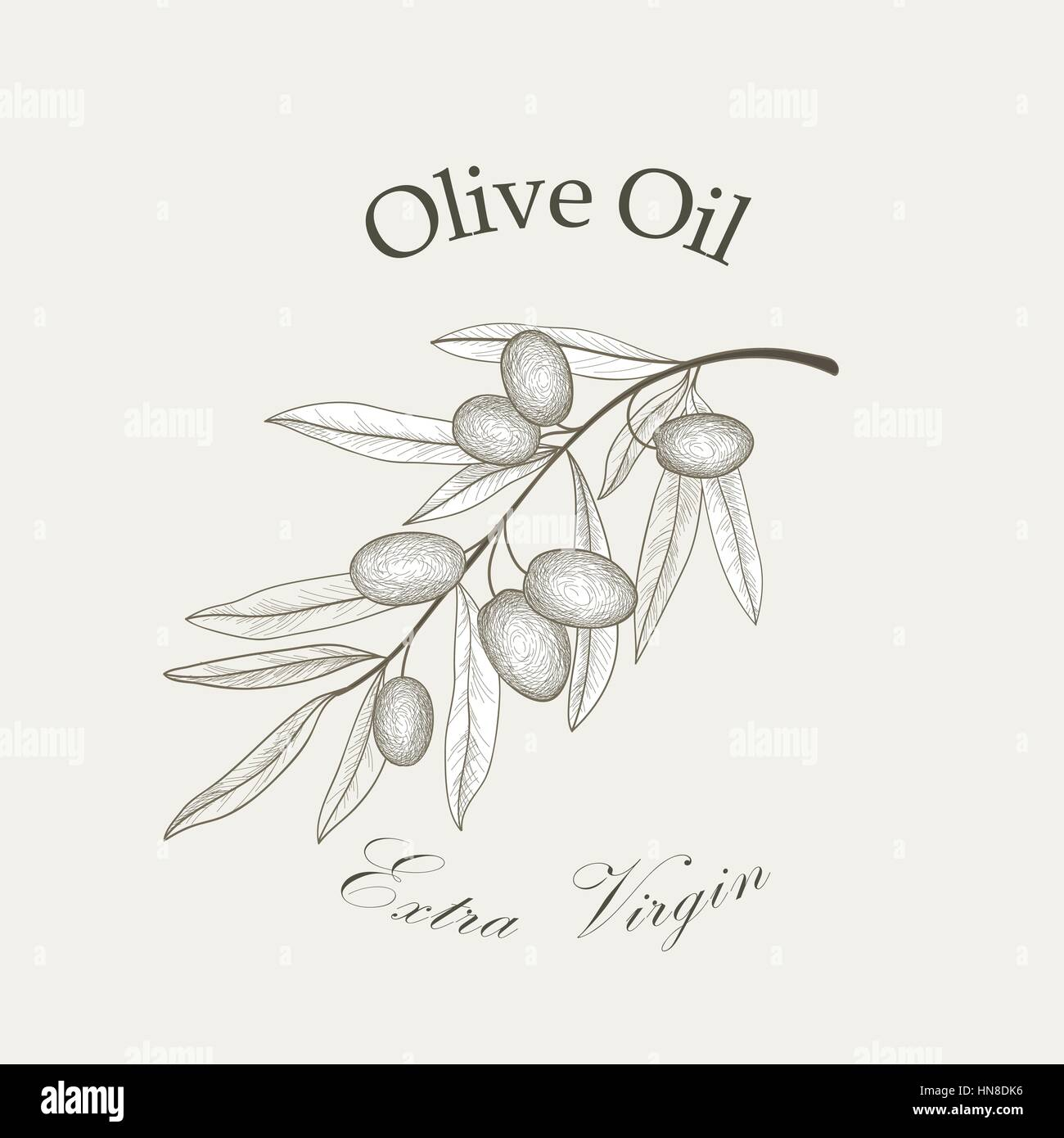 Olive tree branch with olives isolated sketch over white background Retro olive branch engraving Vector illustration - Stock Vector