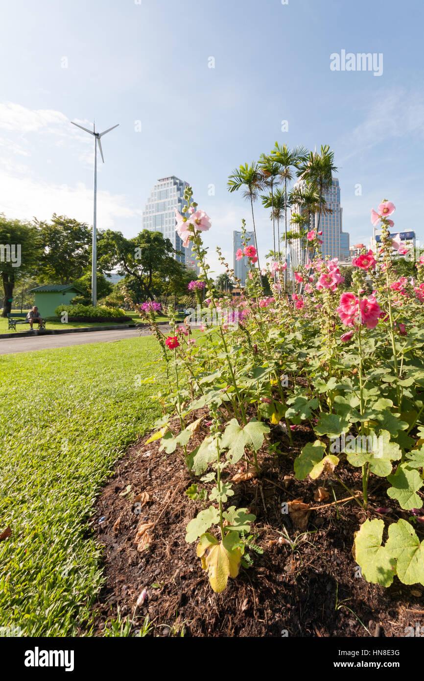 Flower bed in Lumphini park, Bangkok, Thailand - Stock Image