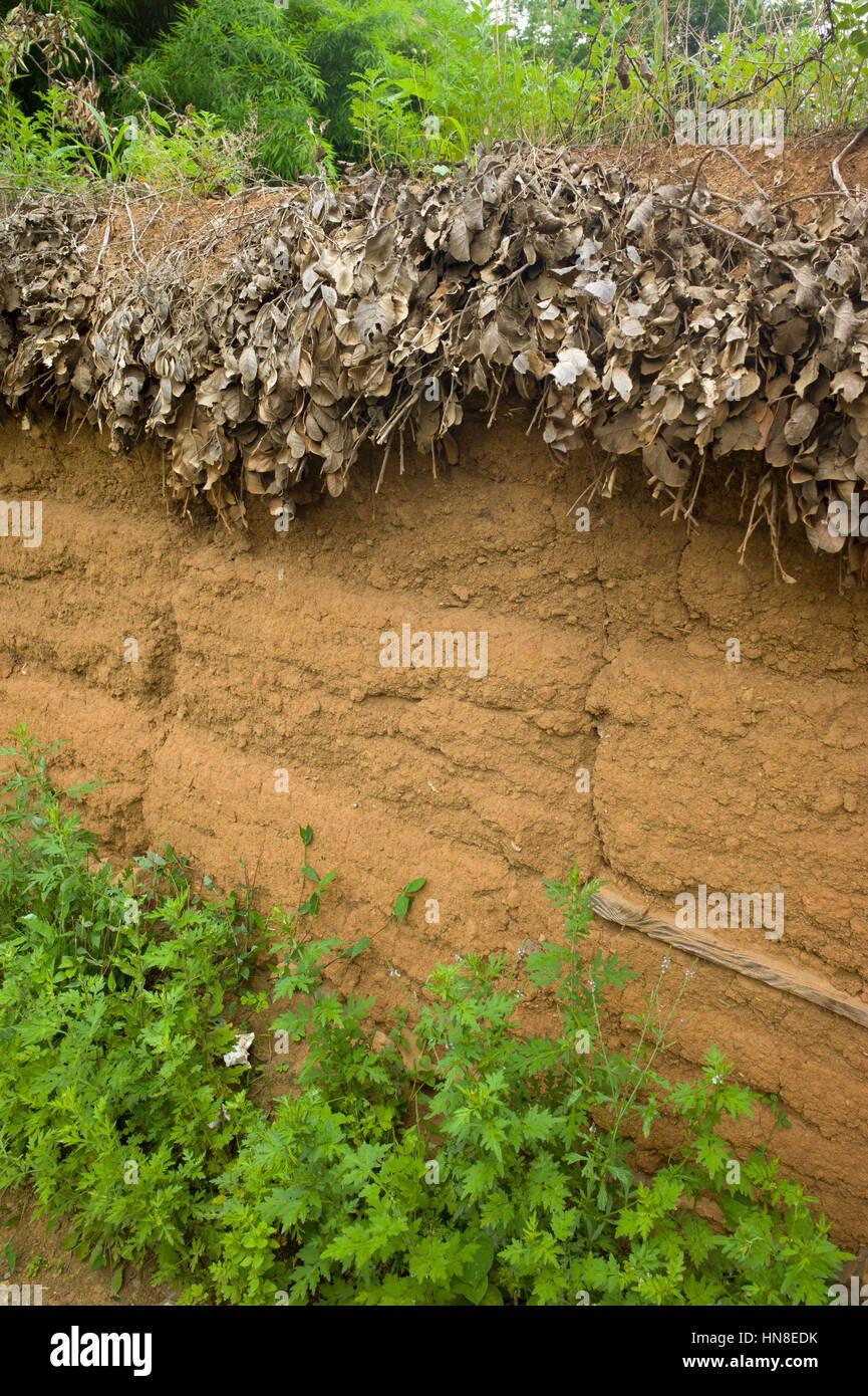 Mud brick wall and thatched covering, Lugu Lake, Yunnan, China - Stock Image