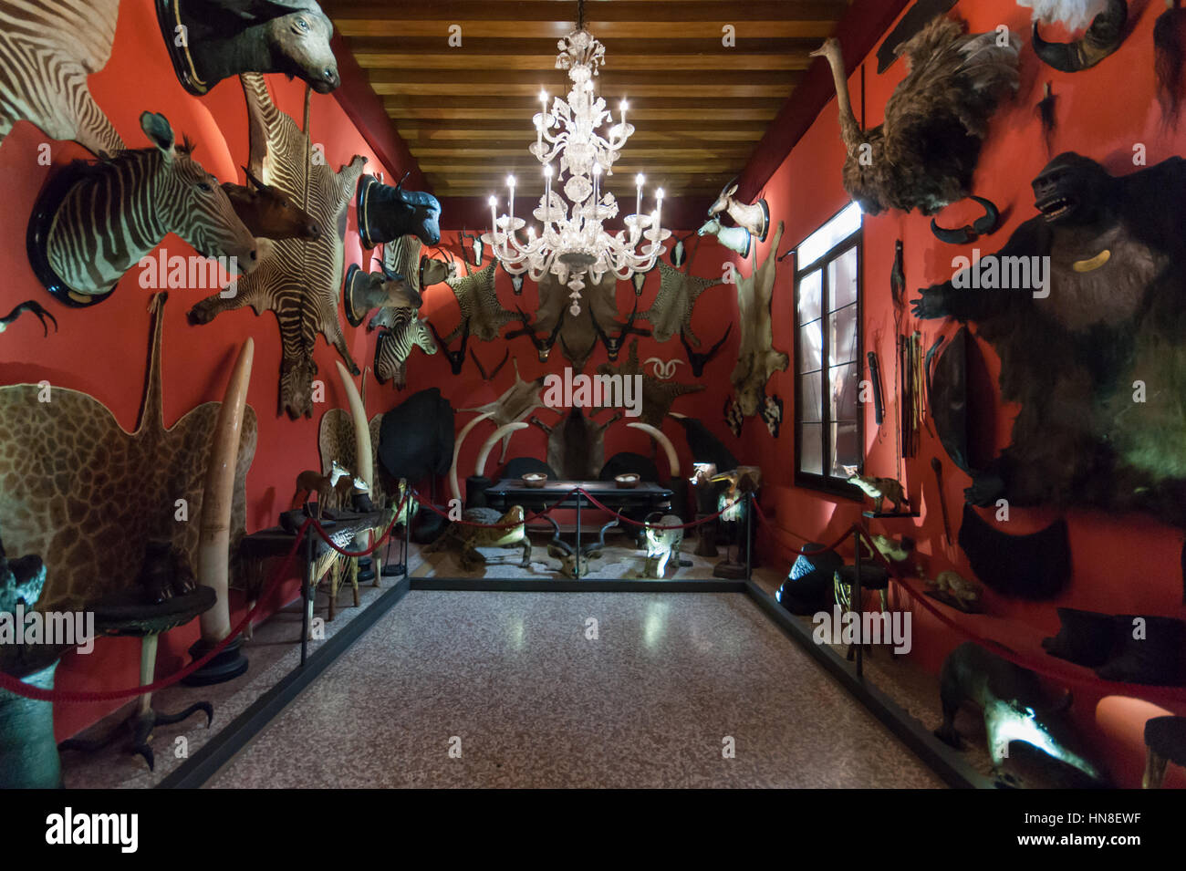 Stuffed animals gallery in the Natural History Museum of Venice - Stock Image