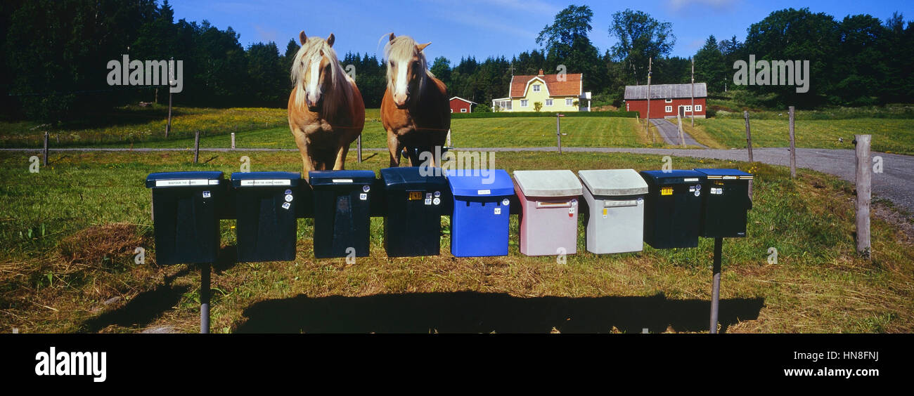 Swedish farmhouse with horses outside. Sweden - Stock Image