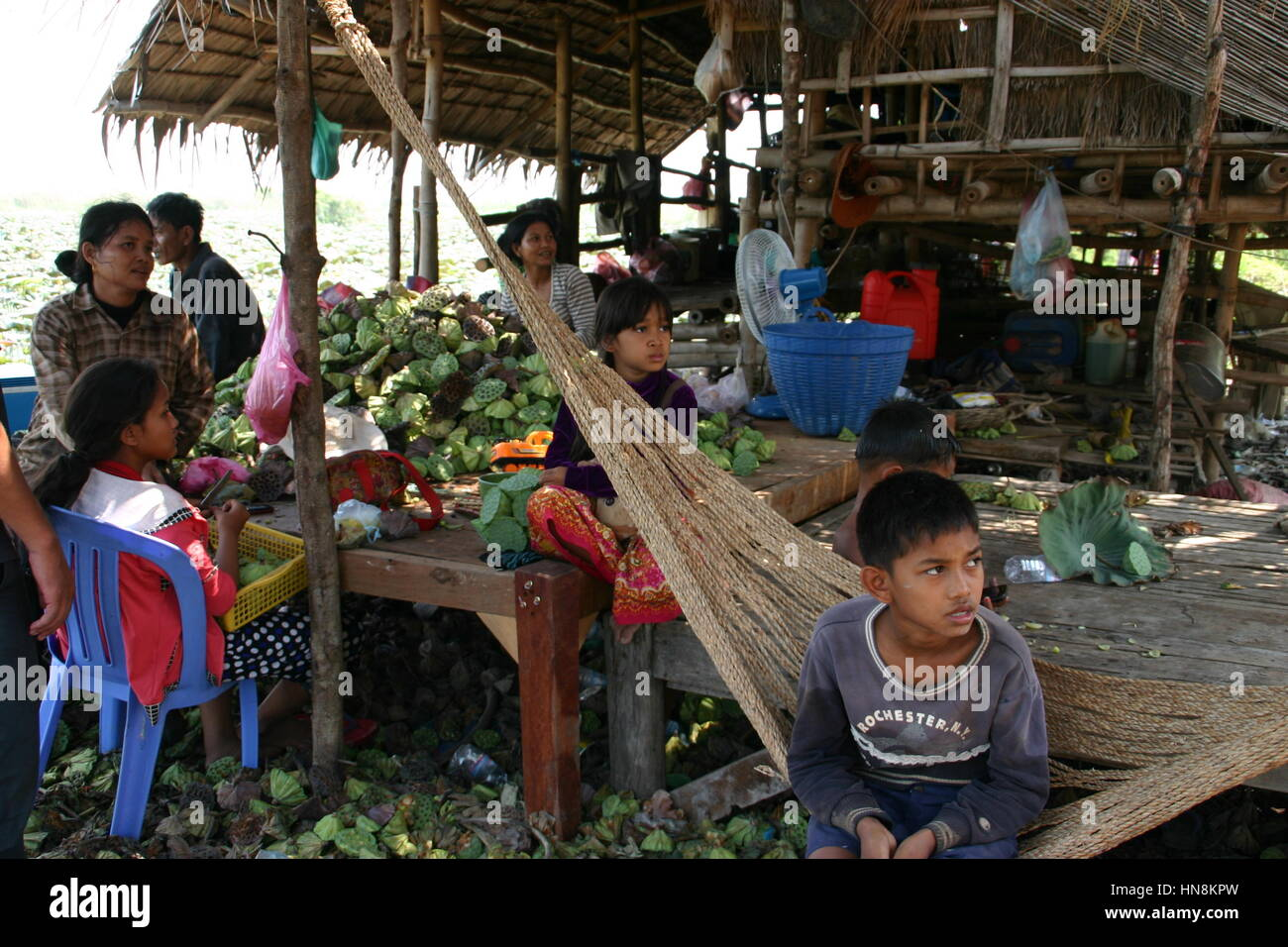 Family earning a living from picking water lily seeds in Cambodia - Stock Image