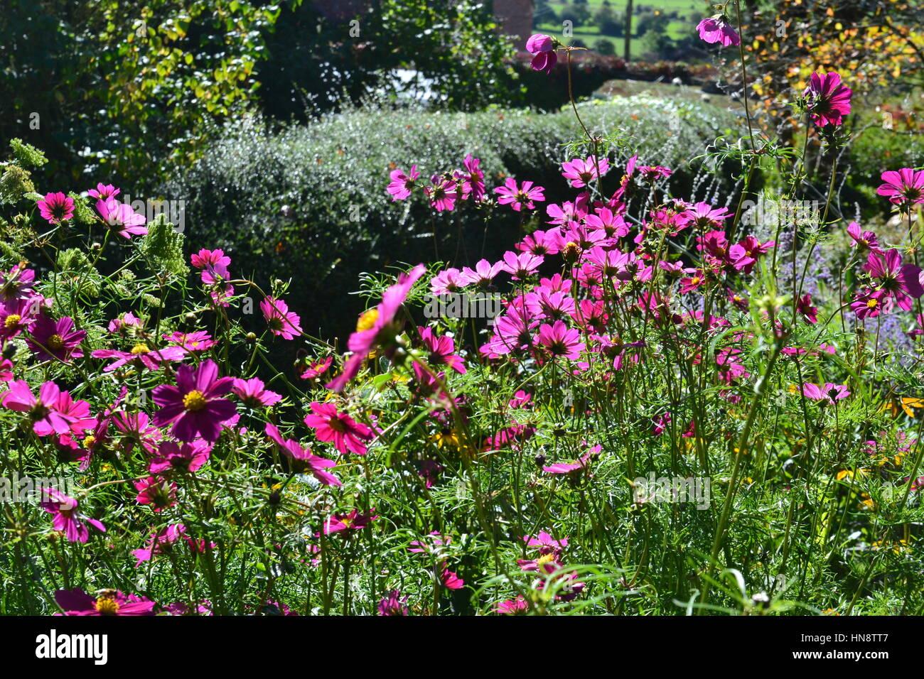 Chalice Well Gardens, Glastonbury, Somerset, Avalon, UK - Stock Image