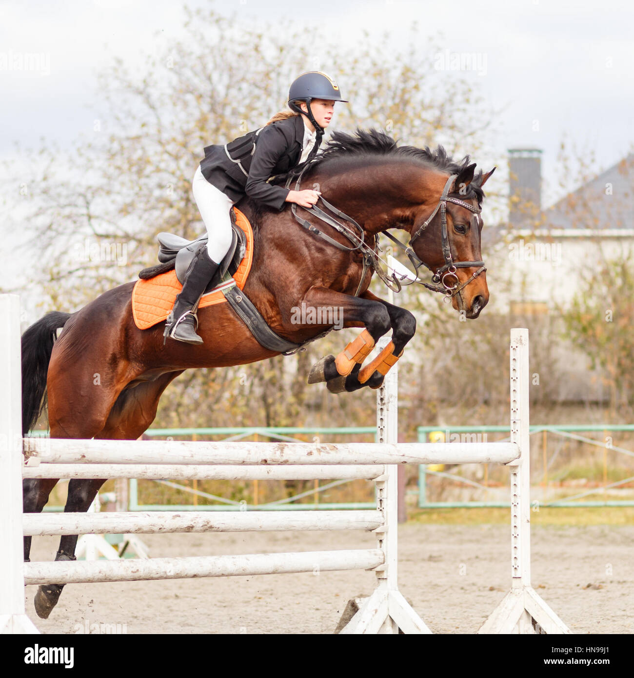Young Female Rider On Bay Horse Jumping Over Hurdle On Equestrian Stock Photo Alamy