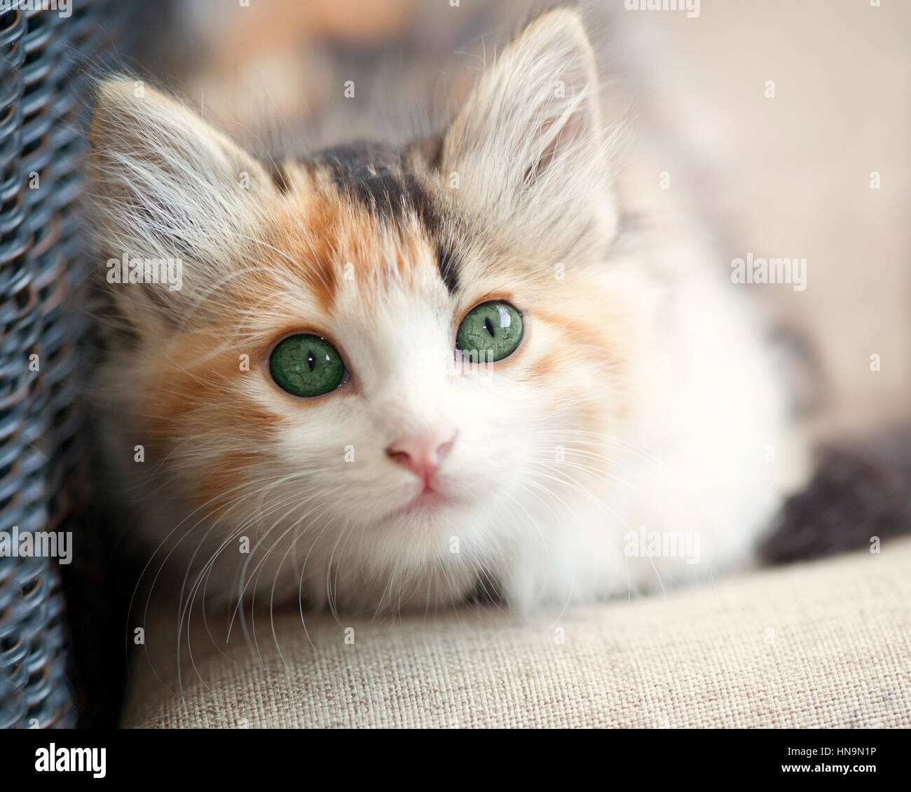 Portrait of kitten - Stock Image