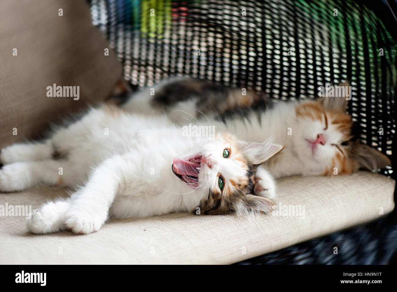 Sleep and sleepy kitten Stock Photo