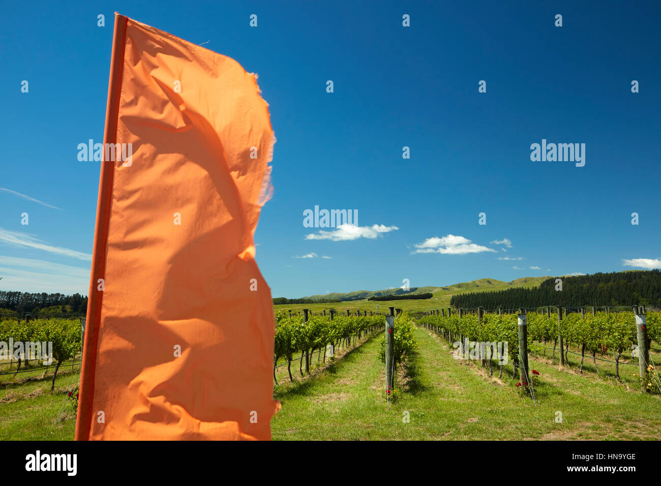Luna Estate Vineyard, Martinborough, Wairarapa, Lower North Island, New Zealand - Stock Image
