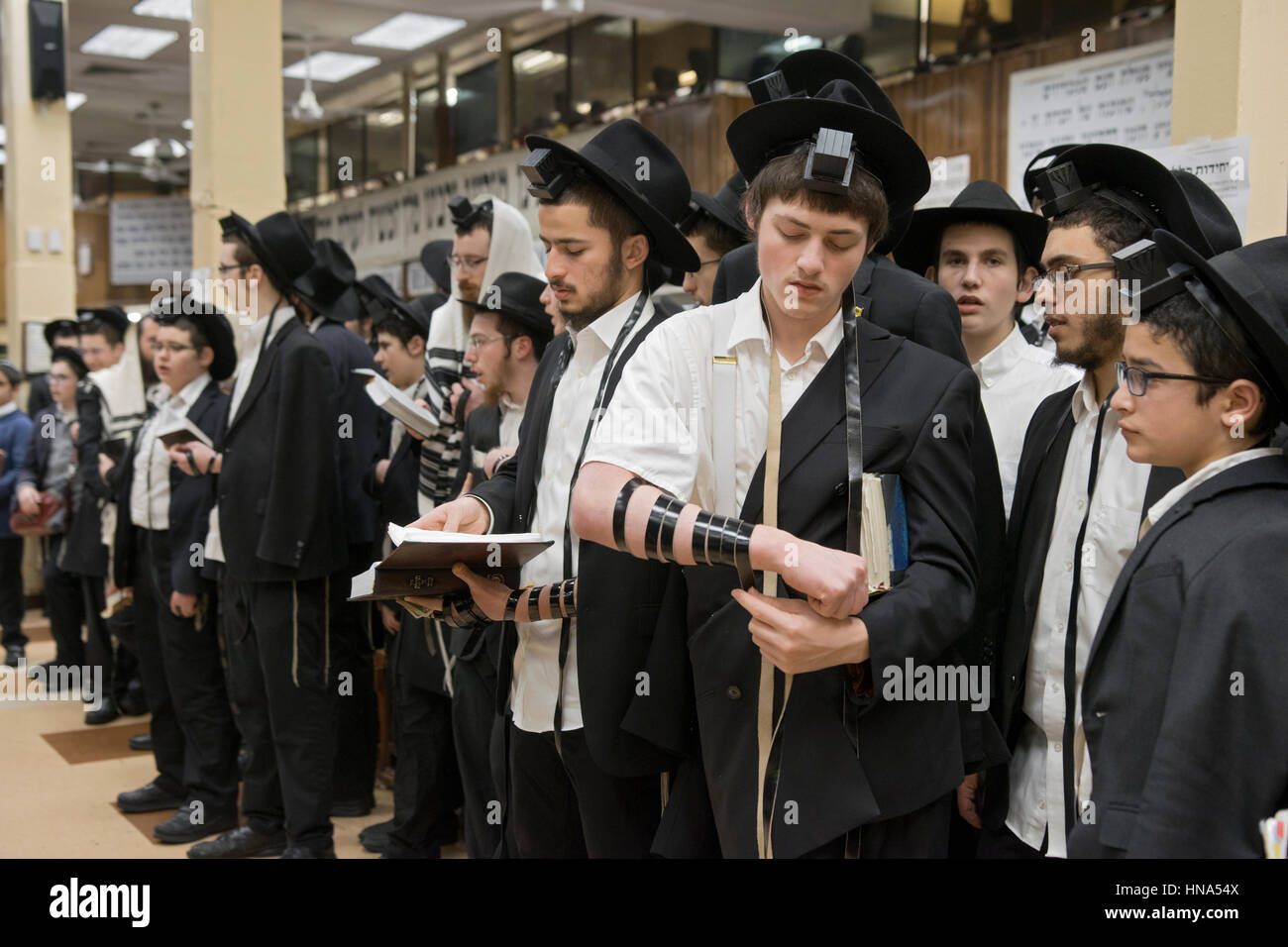 Orthodox Jewish young man putting on phylacteries prior to morning services at a crowded synagogue in Brooklyn, - Stock Image