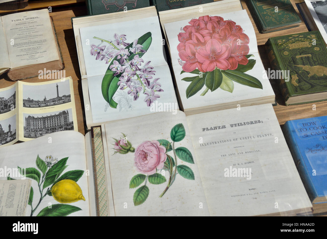 Antiquarian books about plants - Stock Image