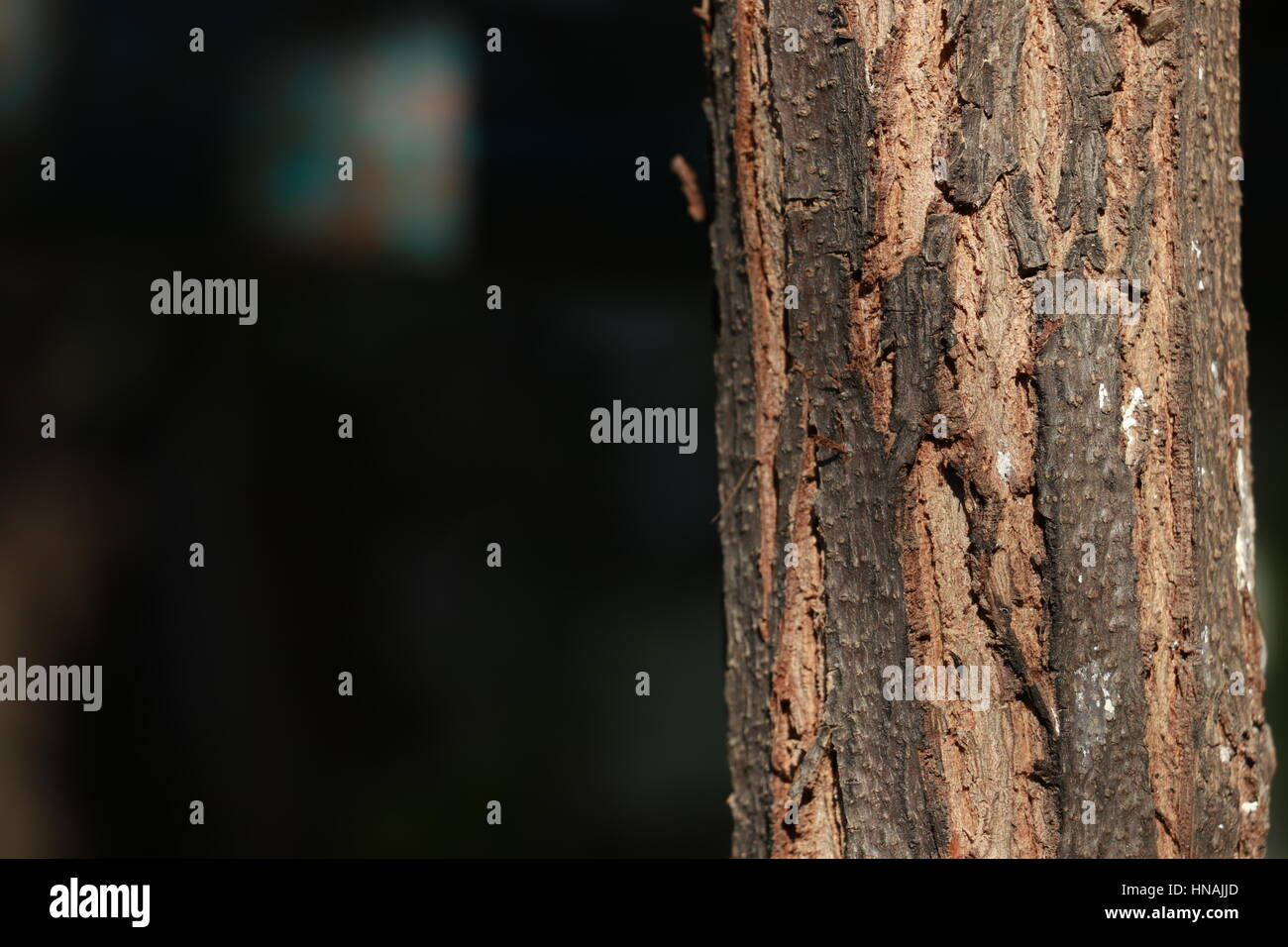 Tree and Stems Focused - Stock Image