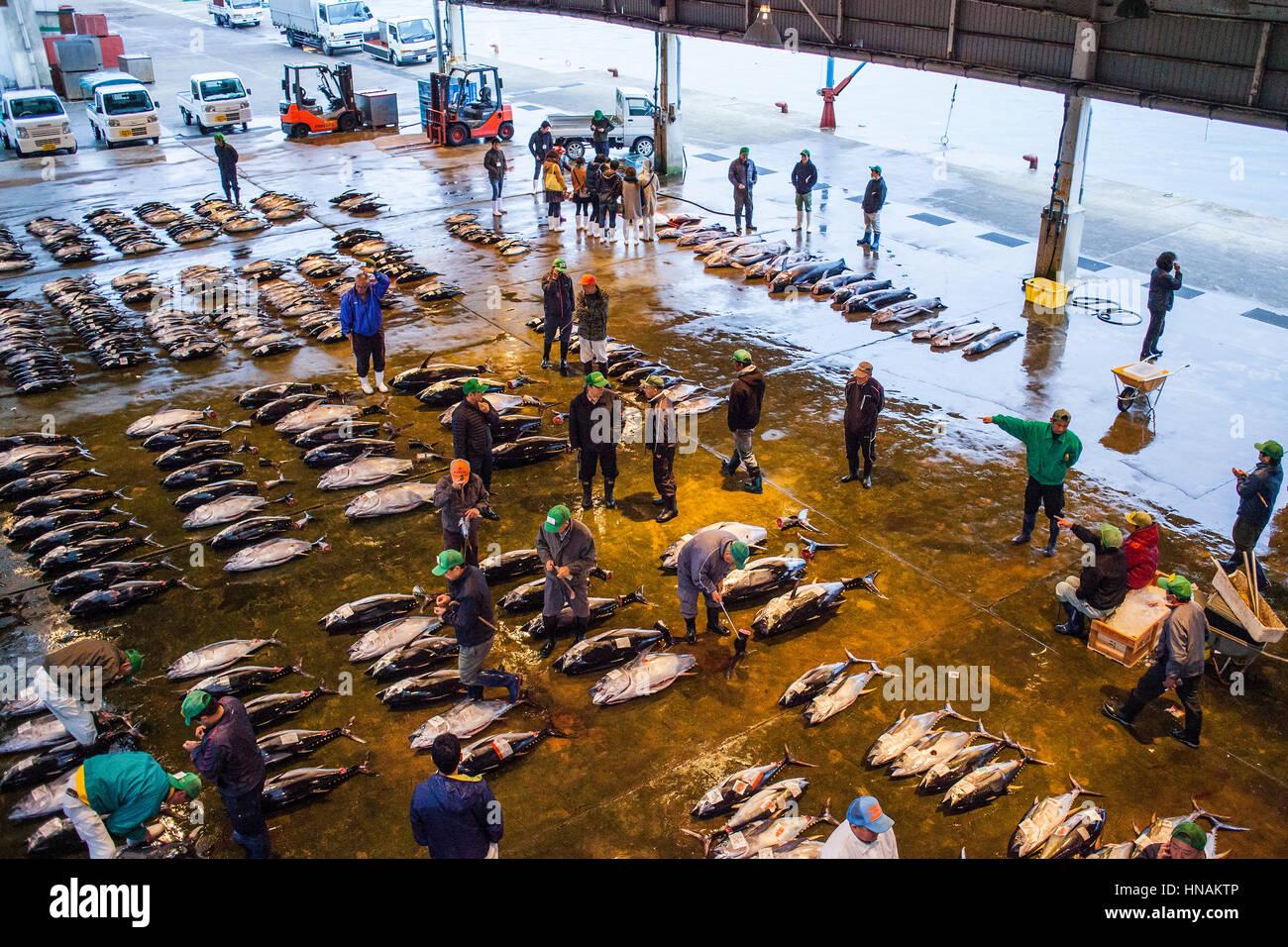 Tuna Market, in fishing port, Katsuura, Nachikatsuura, Nakahechi route, Wakayama, Kinki, Japan. - Stock Image