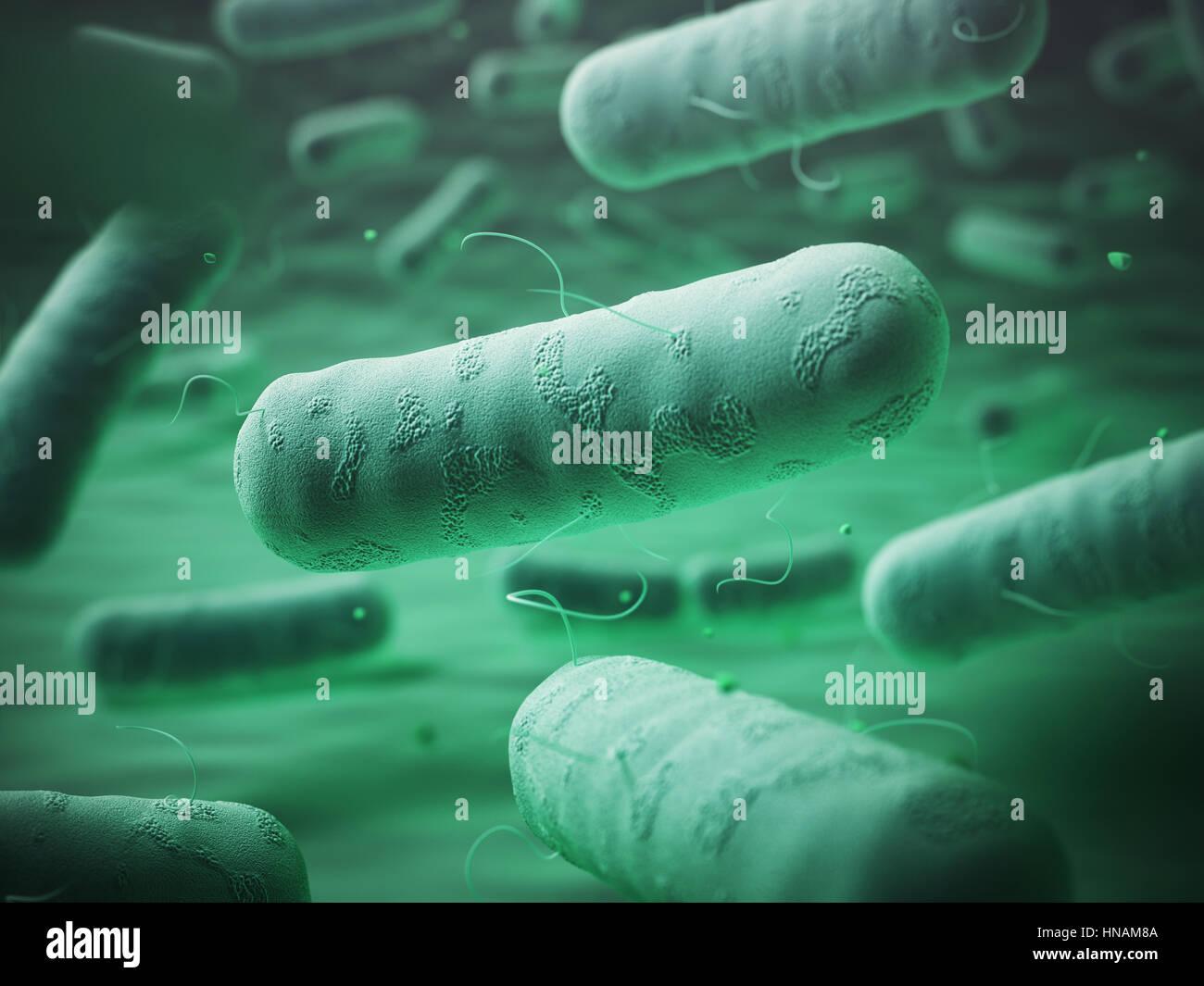 Enterobacteriaceas. Gram-negative bacterias escherichia coli, salmonella, klebsiella, legionella, mycobacterium - Stock Image