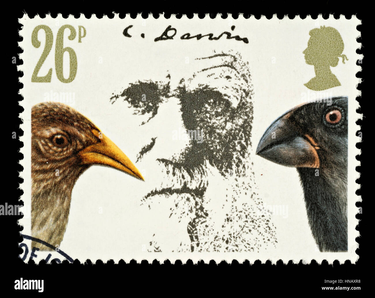 UNITED KINGDOM - CIRCA 1981: A British Used Postage Stamp Showing Charles Darwin Theory of Evolution and Finches - Stock Image