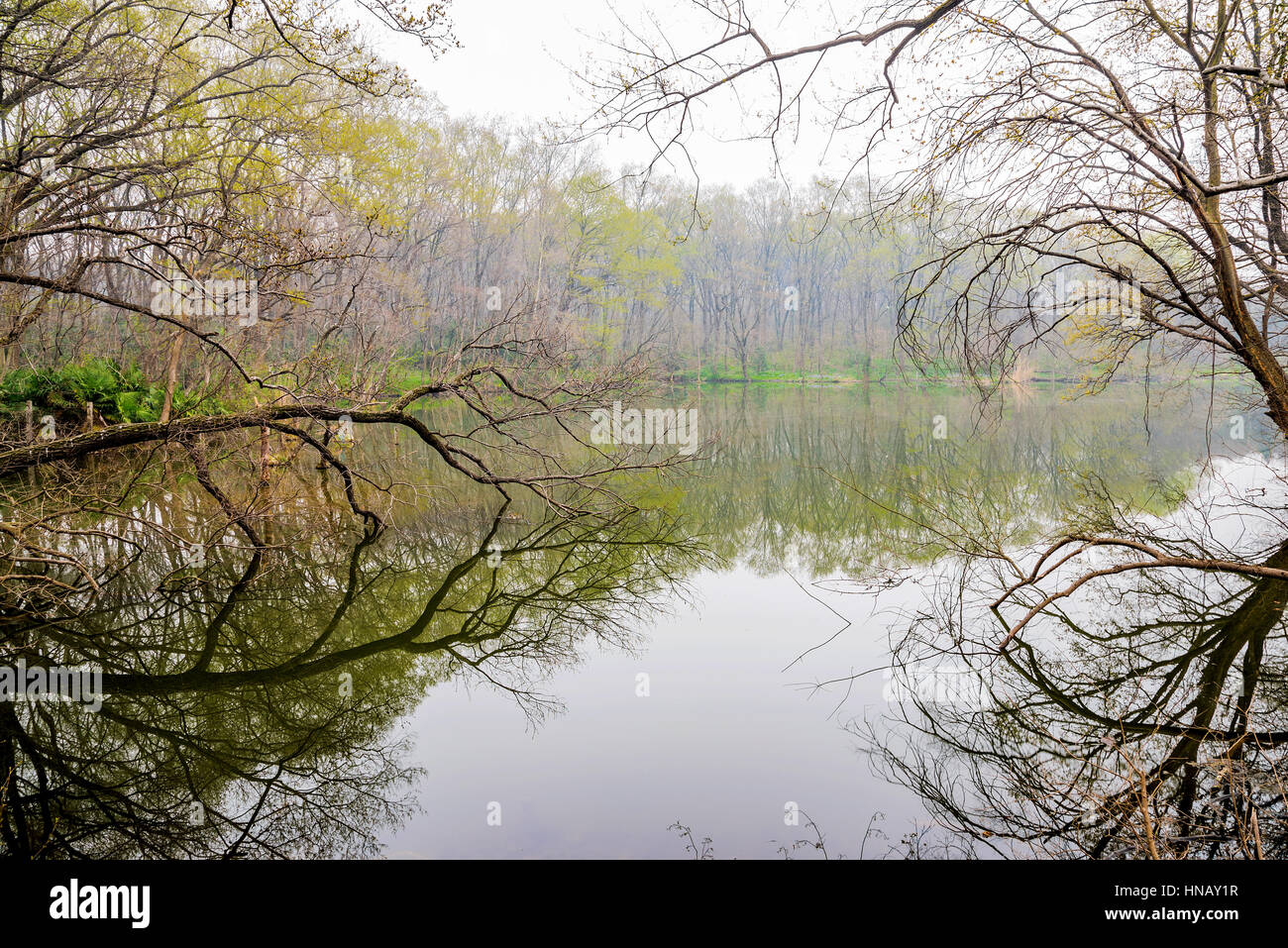 Enchanting lake with dead trees - Stock Image