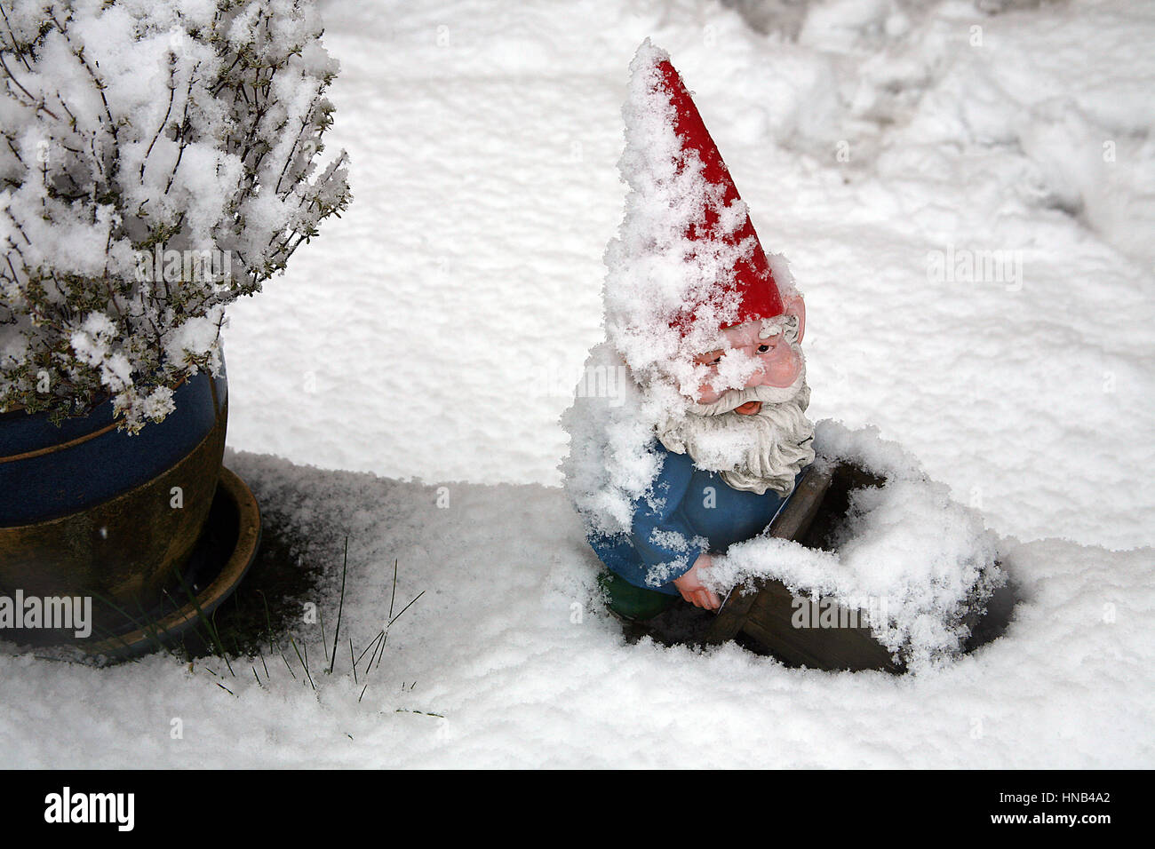 snow covered garden gnome in red pointy hat - Stock Image
