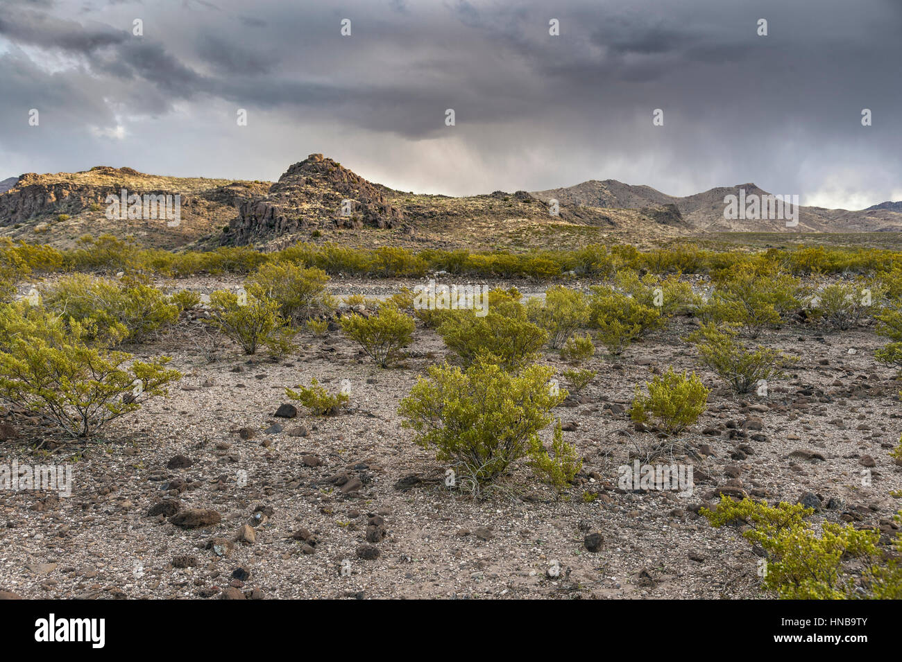Rainstorm In Arizona Desert, Arizona, USA - Stock Image