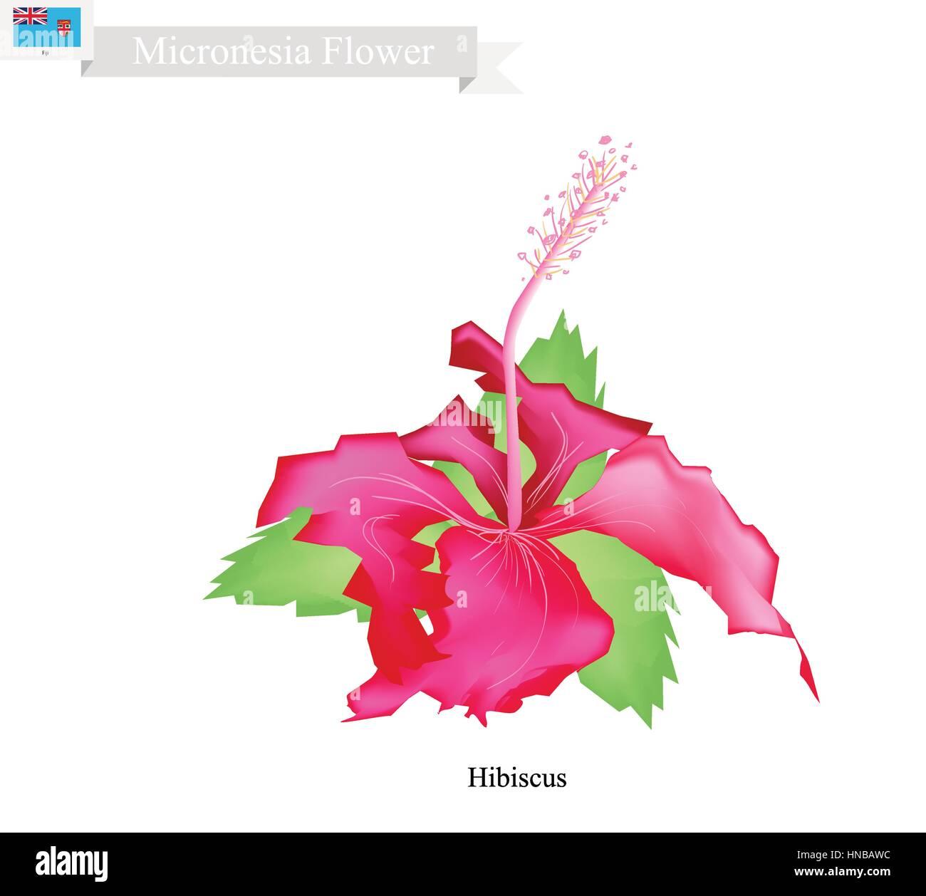 Micronesia flower illustration of hibiscus flowers the national micronesia flower illustration of hibiscus flowers the national flower of federated states of micronesia izmirmasajfo