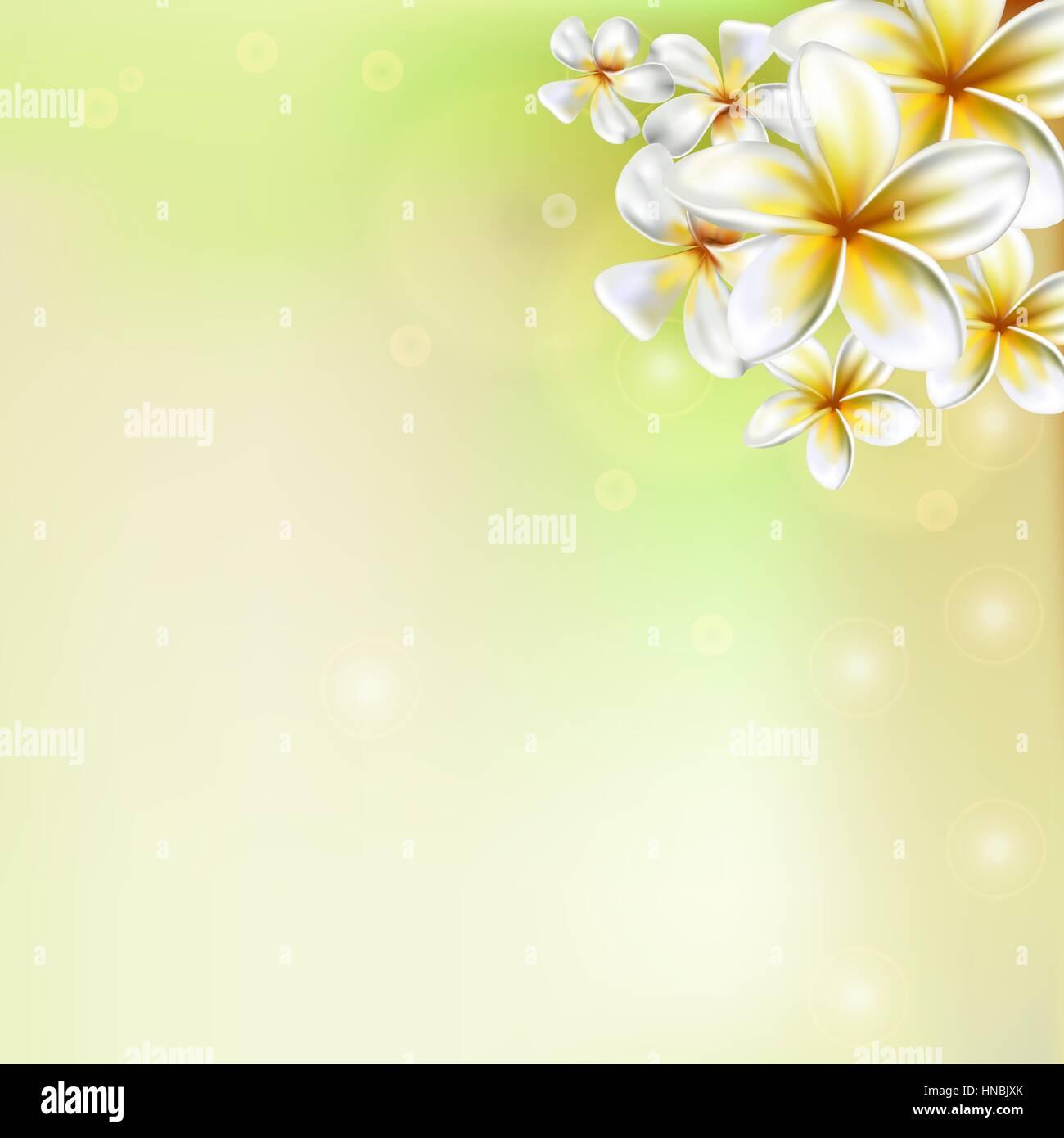 Plumeria flower. Frangipani - Stock Vector