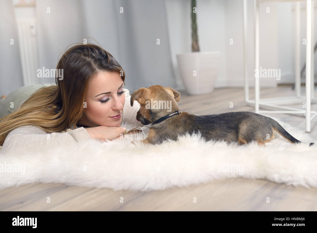 Loving young woman with her little dog playing a game together on a fluffy white rug in the house in a show of loyalty - Stock Image