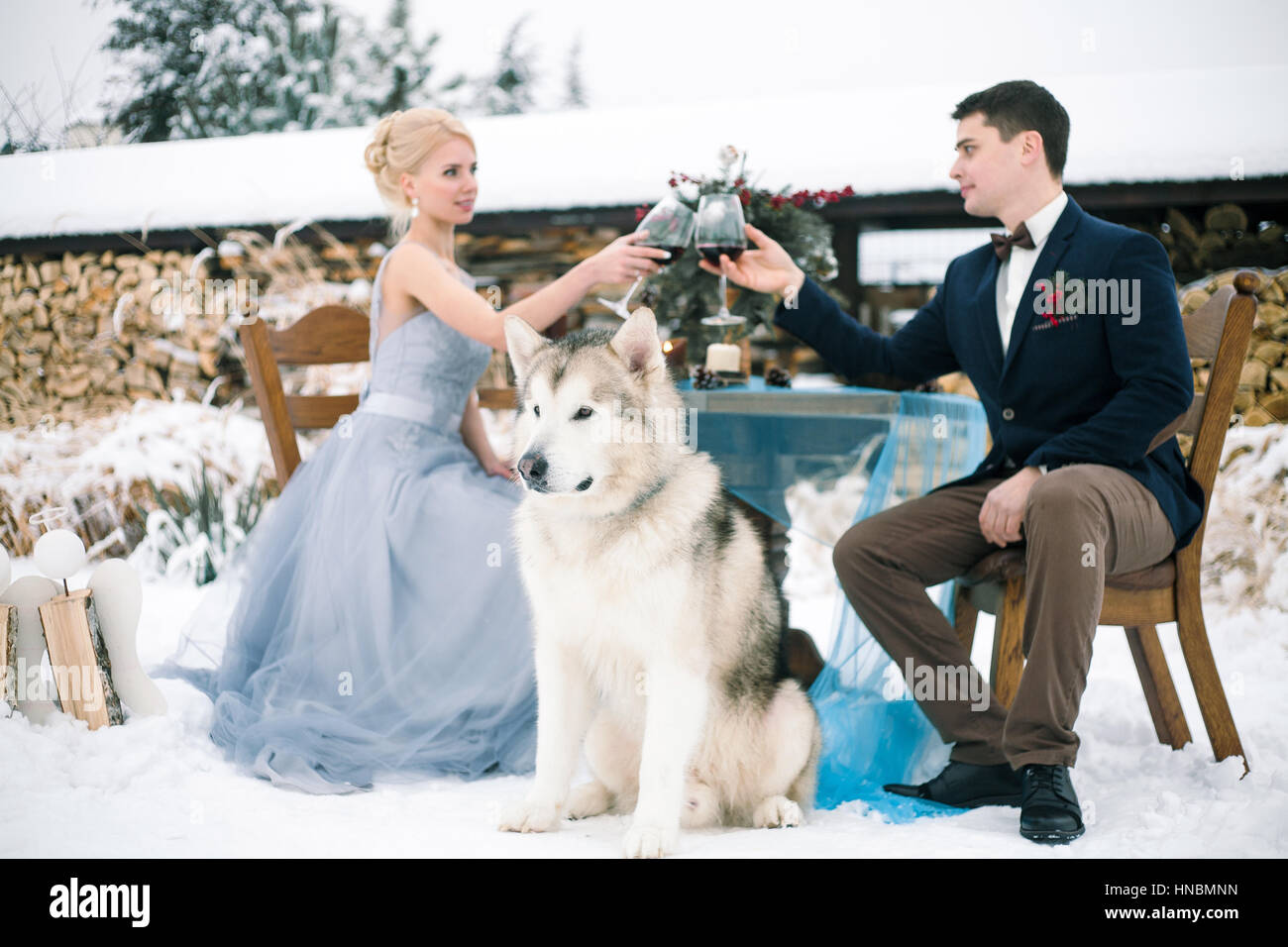 Bride and groom in winter with dog malamute sitting at table  and clink glasses with wine. On the table is bouquet. - Stock Image