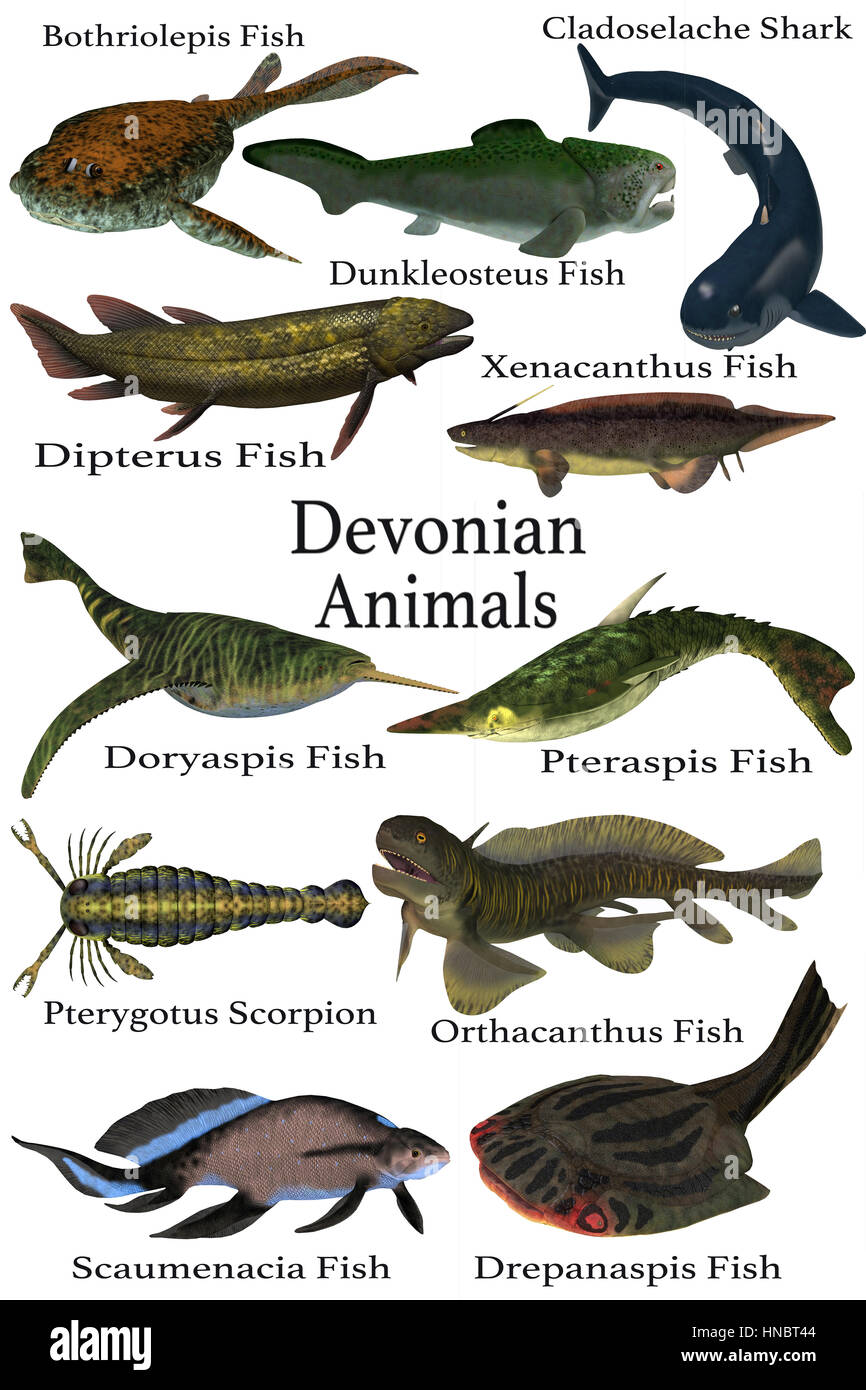 Devonian Animals - A collection of various aquatic animals that lived during the Devonian Period of Earth's - Stock Image