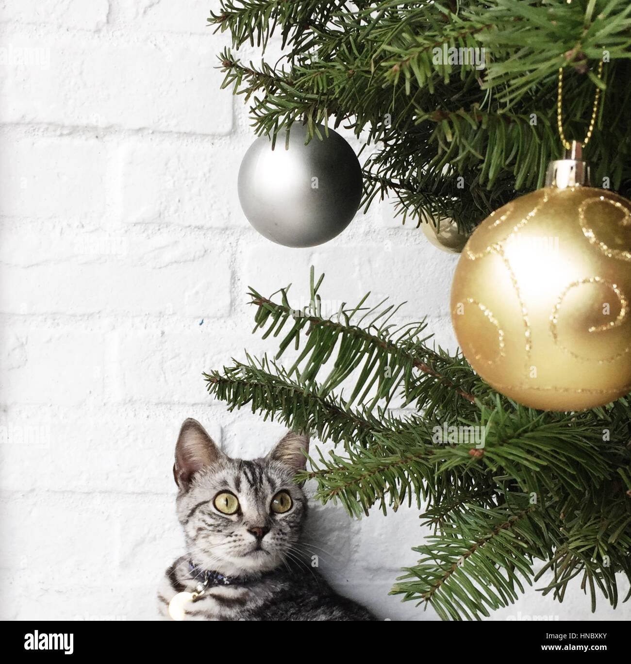 Cat looking at christmas tree with baubles Stock Photo