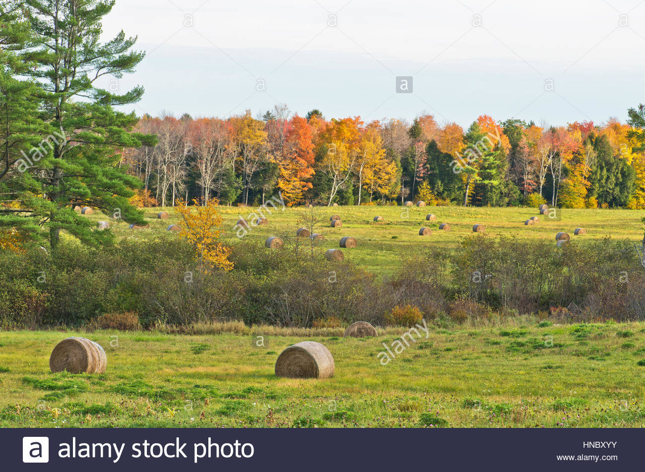 Bails of hay await storage during the fall in Durham, Maine. - Stock Image
