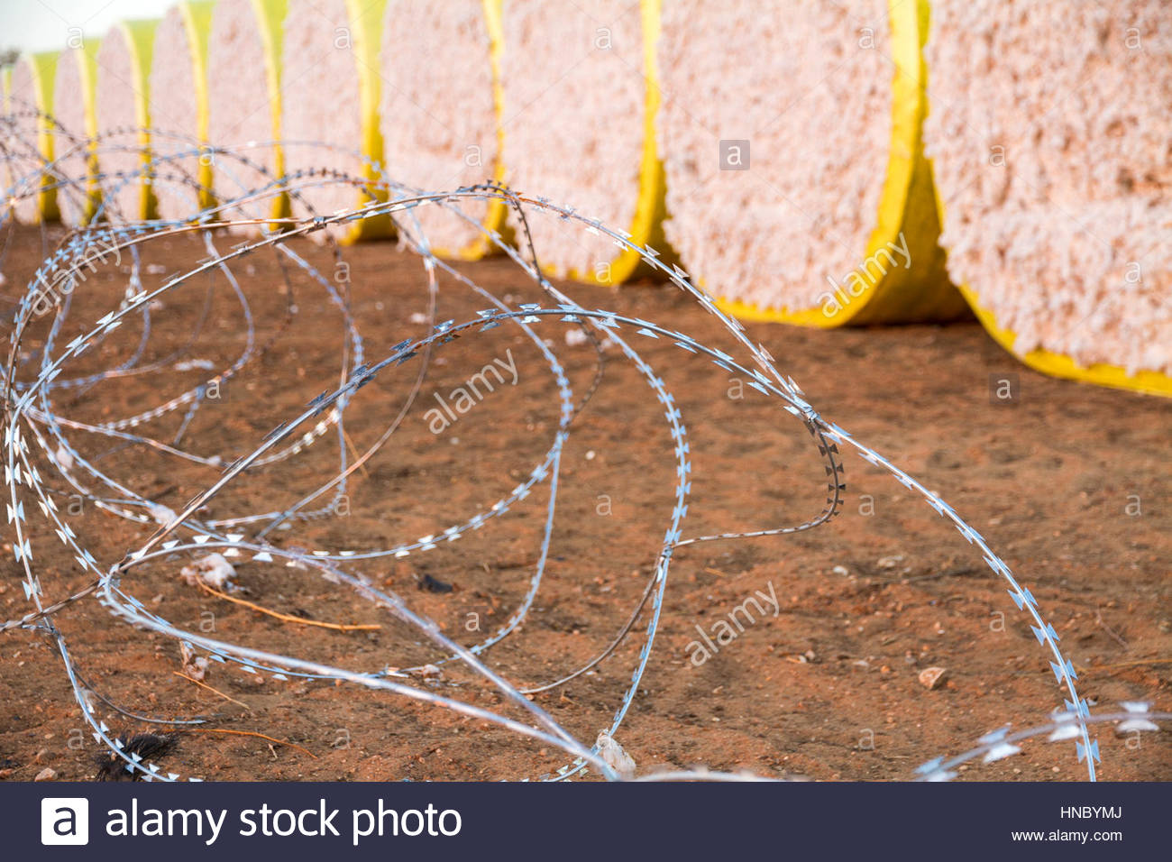 Round bales of harvested cotton wrapped in yellow plastic ready for shipment, Surrounded by a barbwire - Stock Image